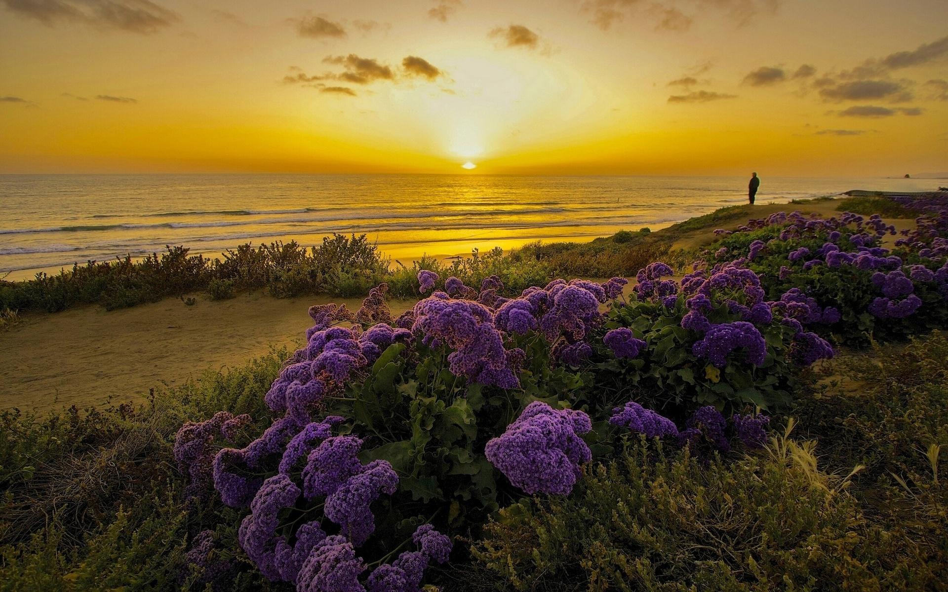 закрывают море фиолетовых цветов картинки выпасаясь