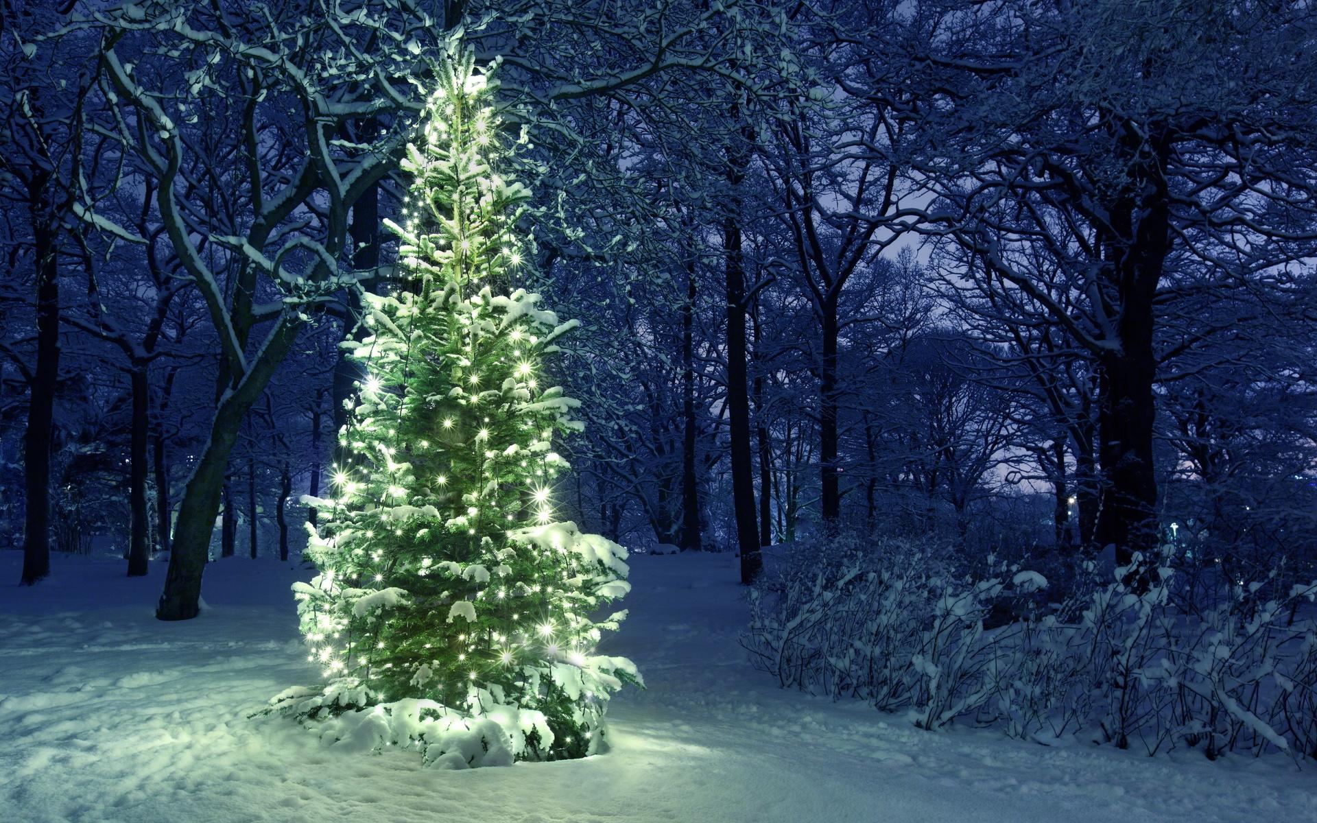 Картинка елка новый год лес