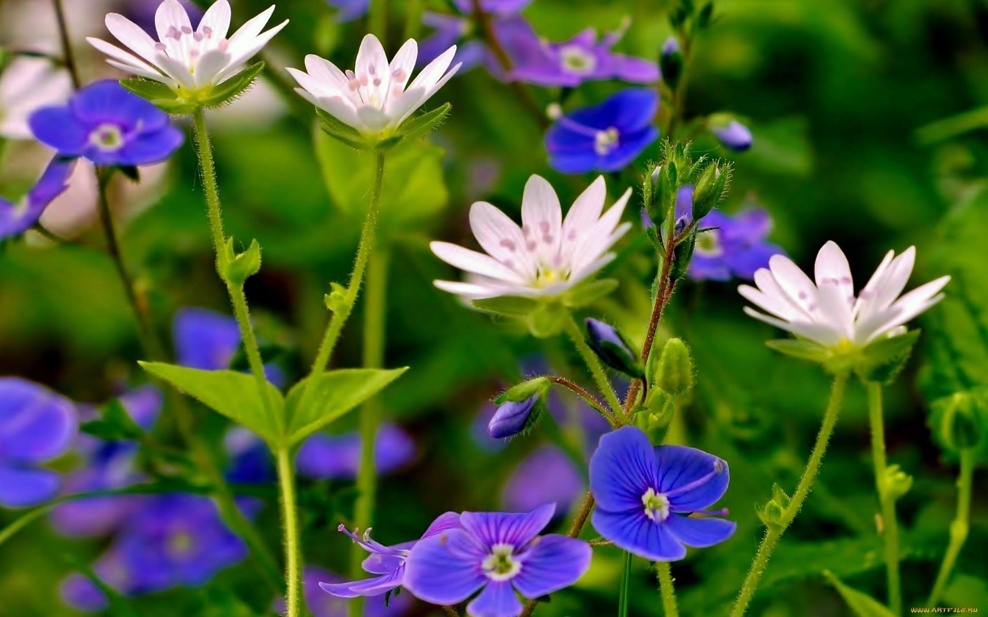 картинки цветы садовые полевые на телефон обои загадкой мумий