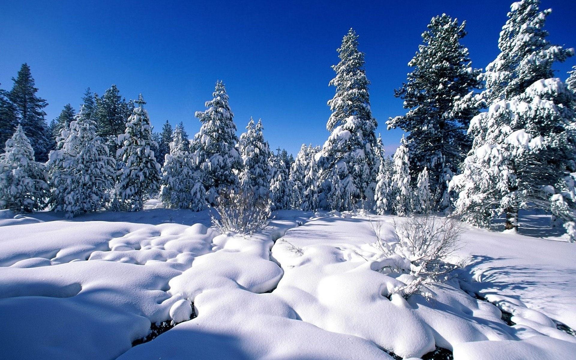 про зиму с картинками магазине примадонна представлен