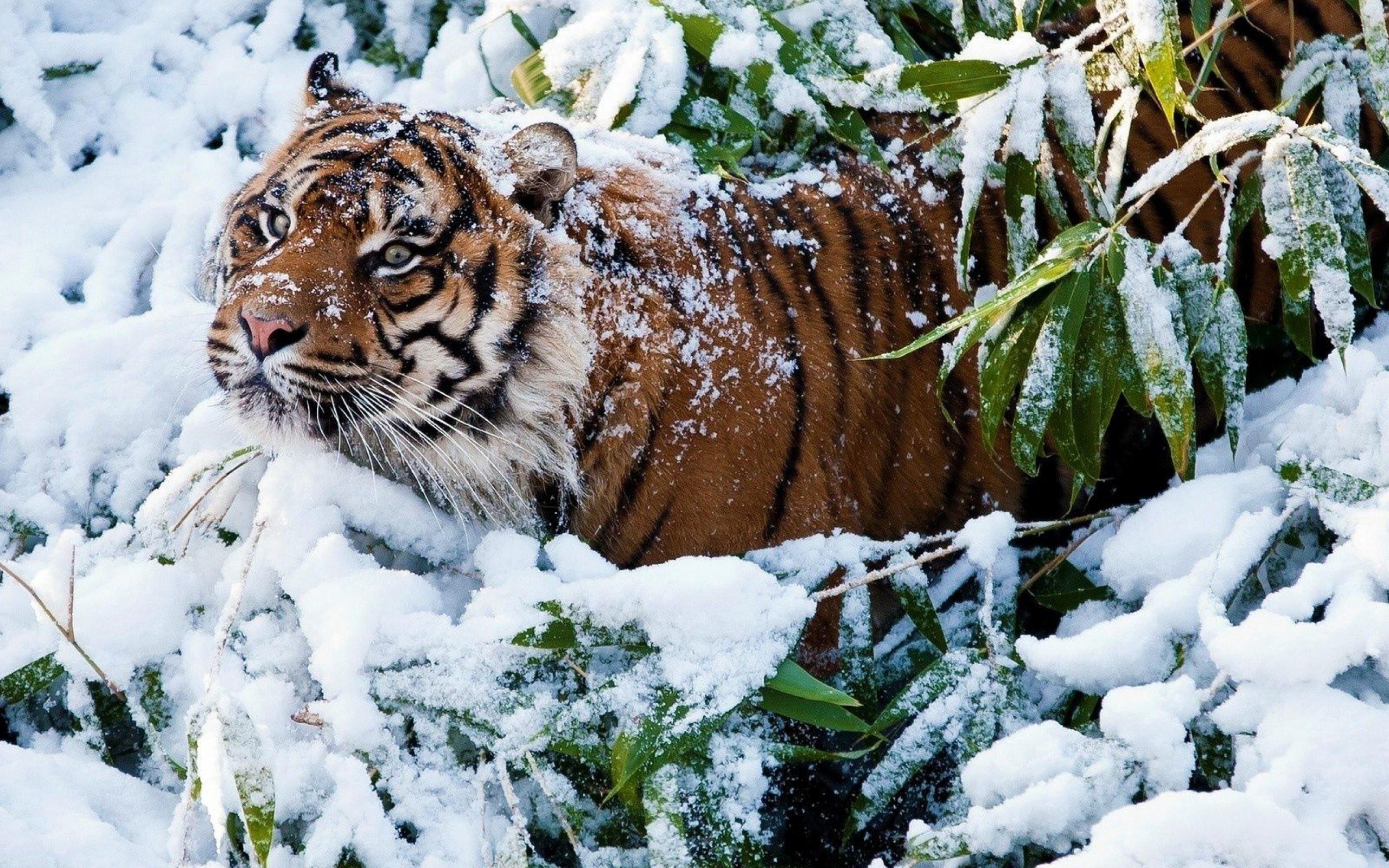 красивые картинки животных в снегу владельцы