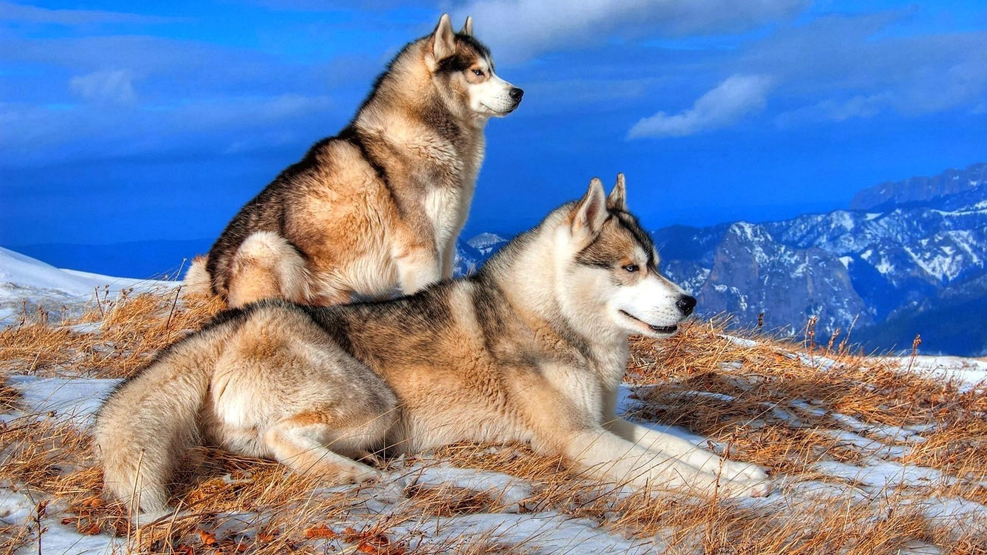 Красивые картинки с природой и животными зима, летием мальчика
