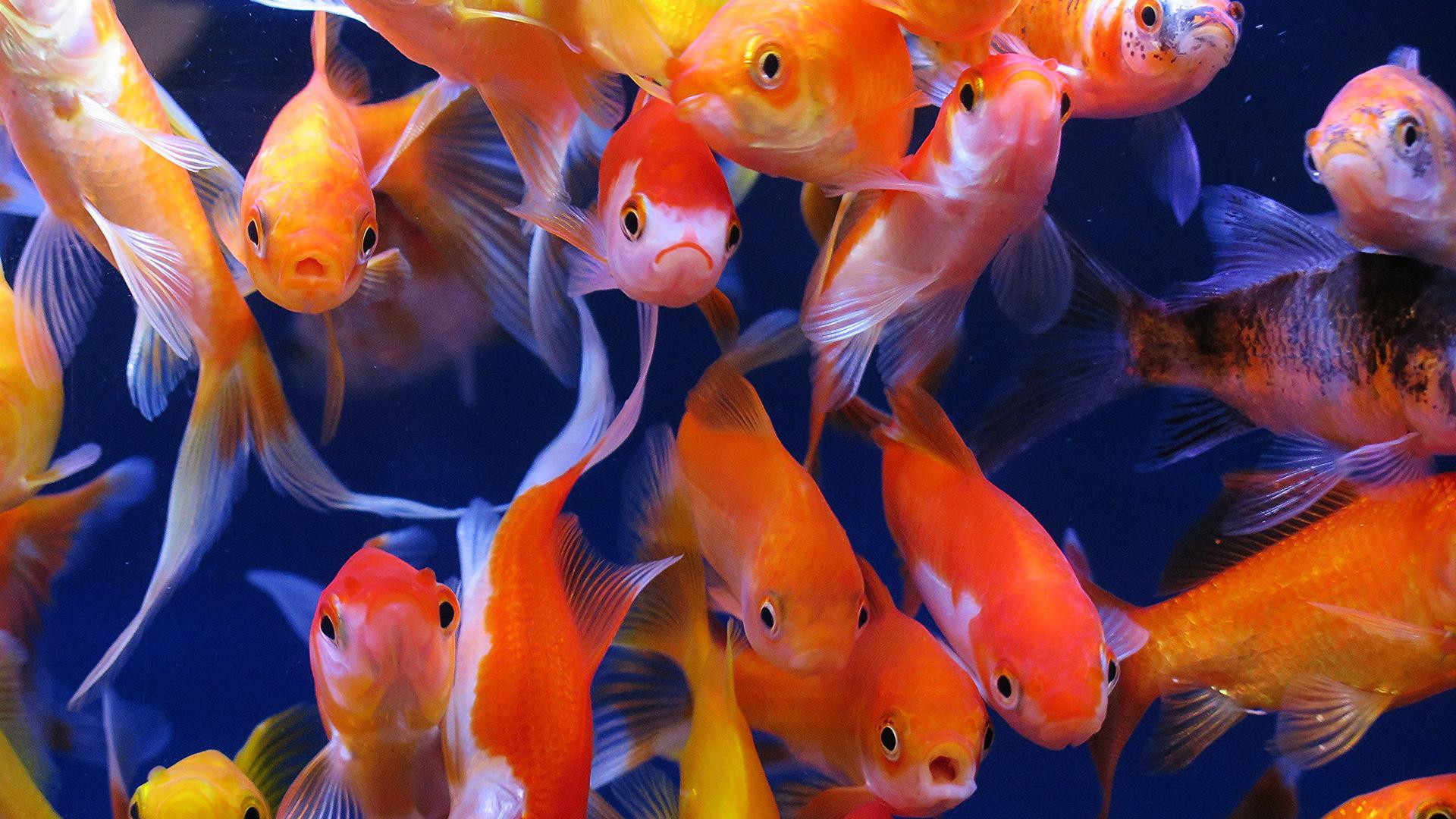 фото цвета удачи для рыб различных радиодеталей содержит