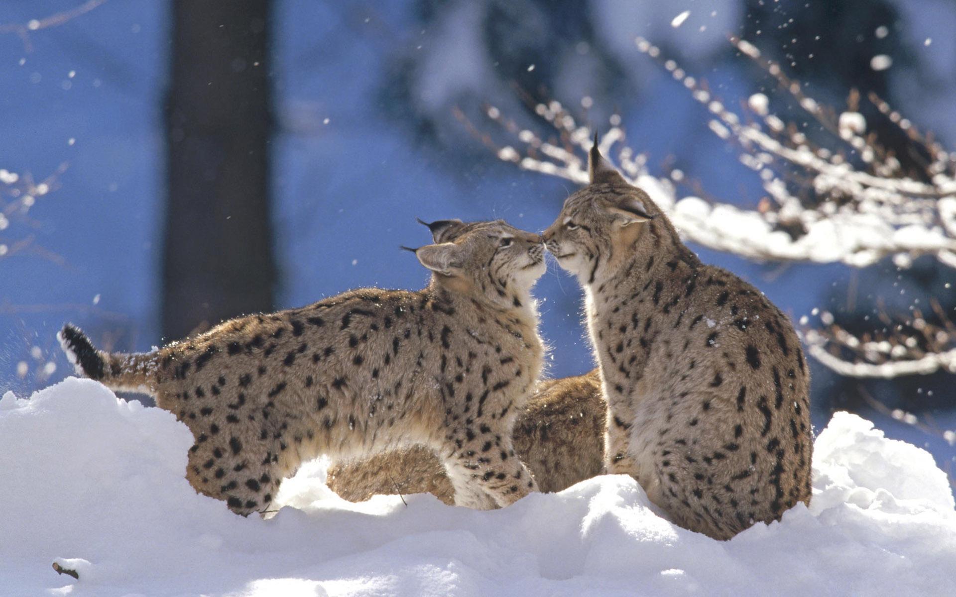 Картинки зима природа животные