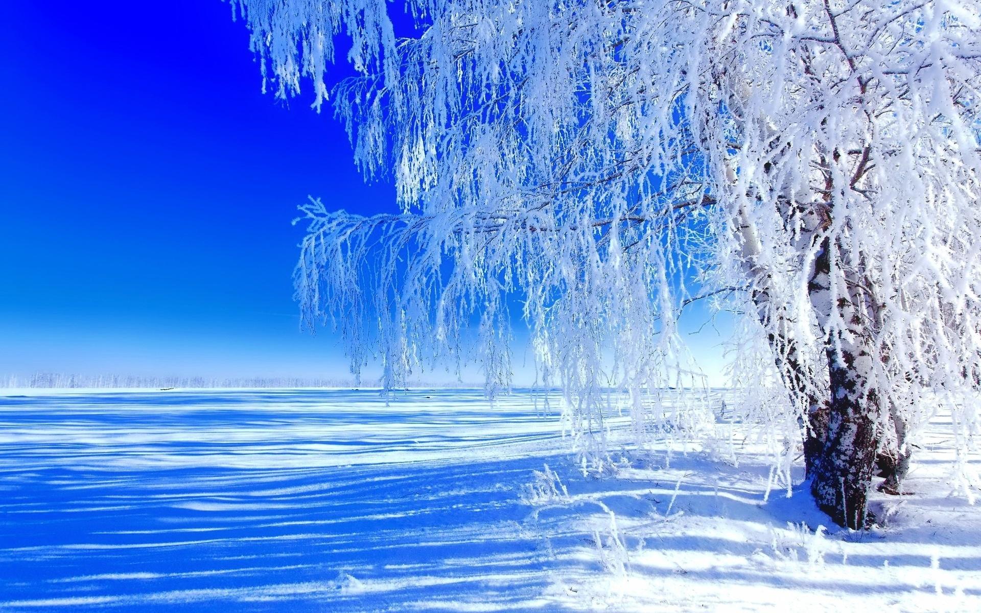 красивая живая картинка зимнего утра них сухая