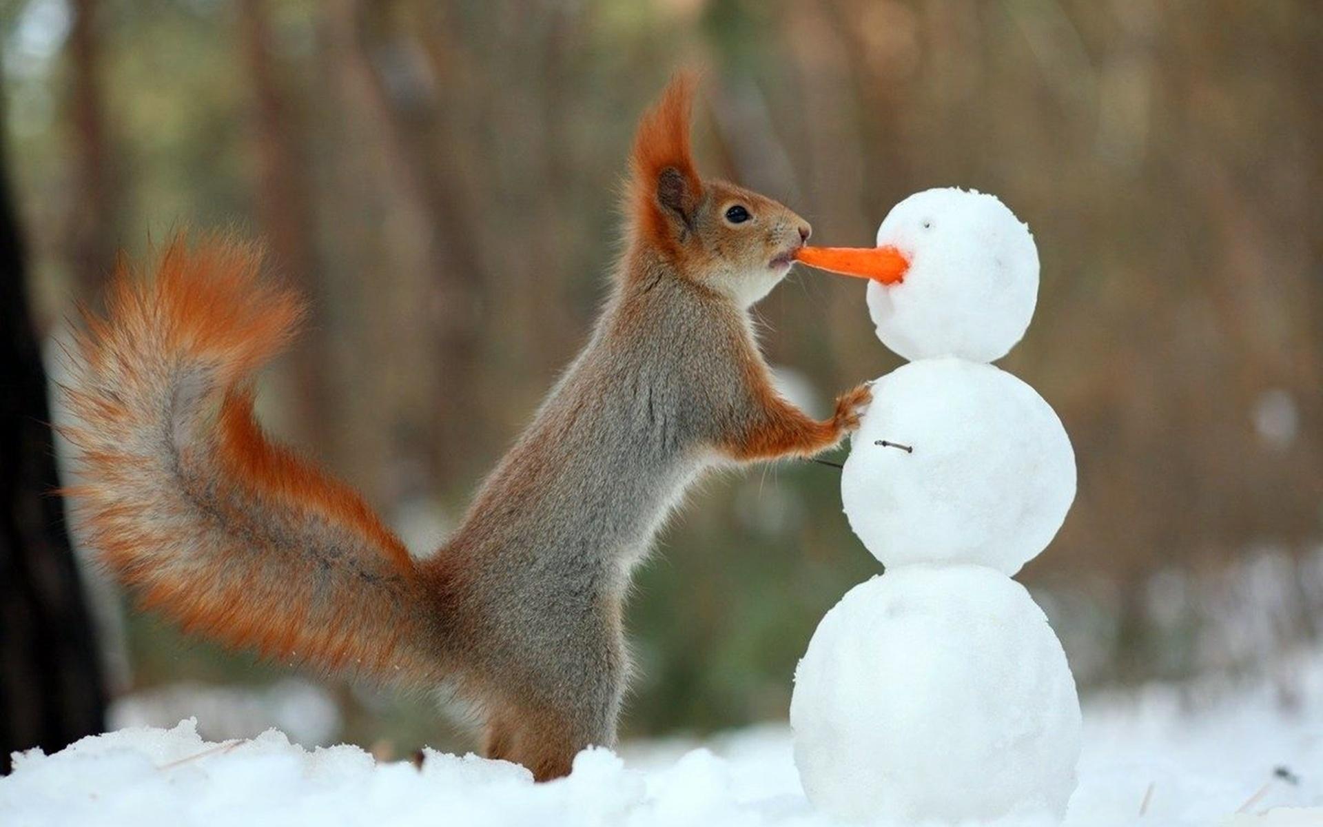 Зимние смешные картинки с животными