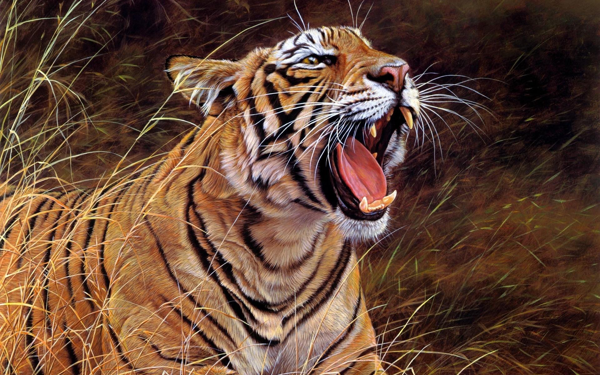 Картинки тигр ярость