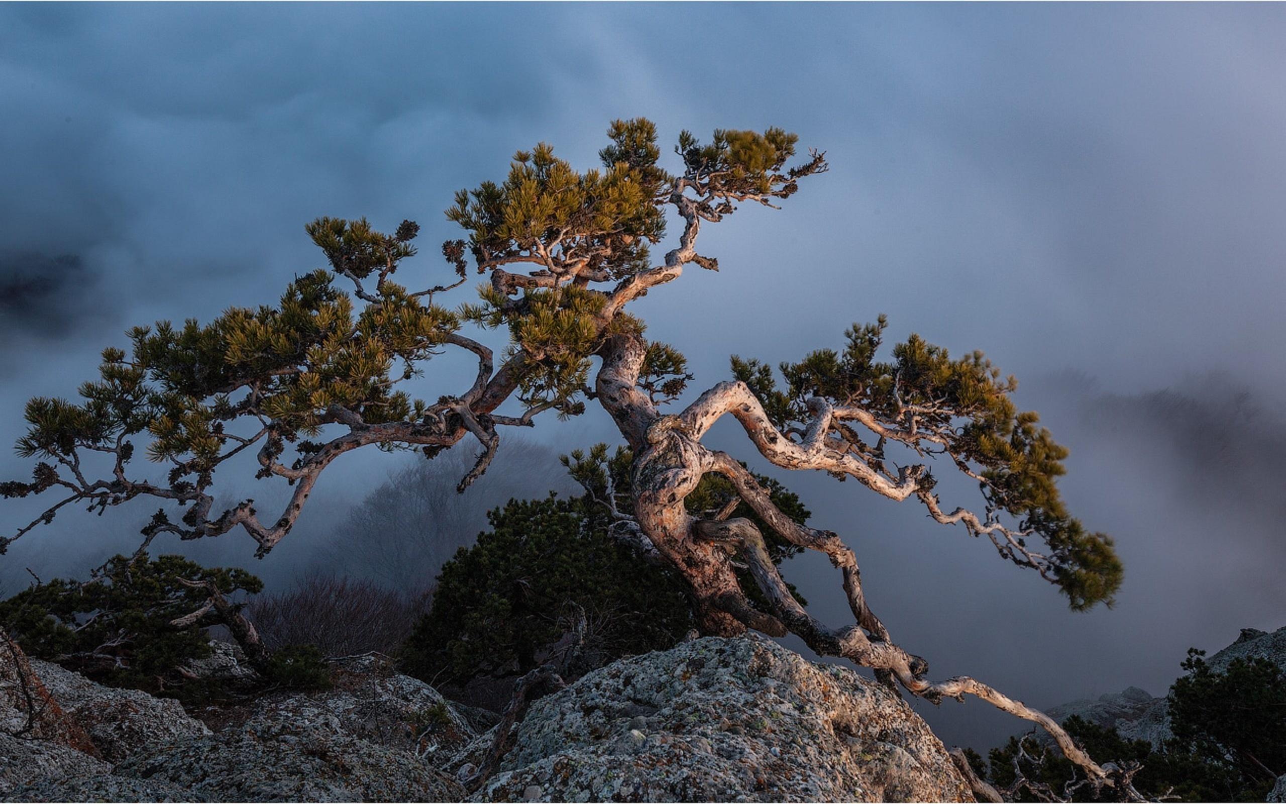картинка дерево на скале день используем