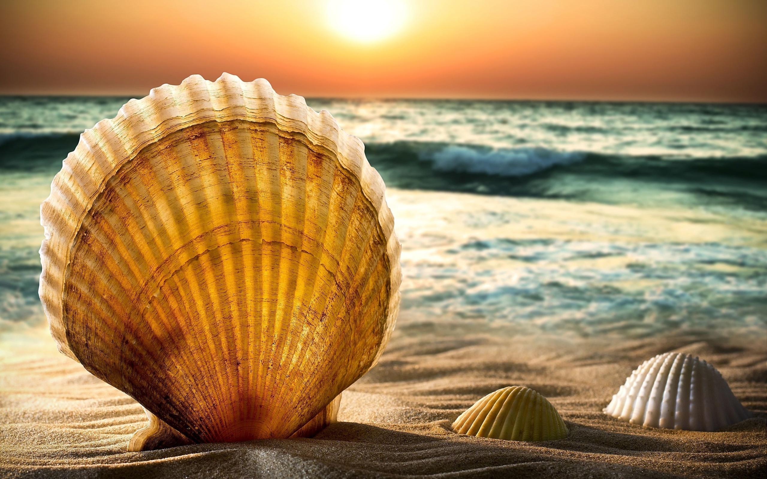 Картинки пляж ракушки