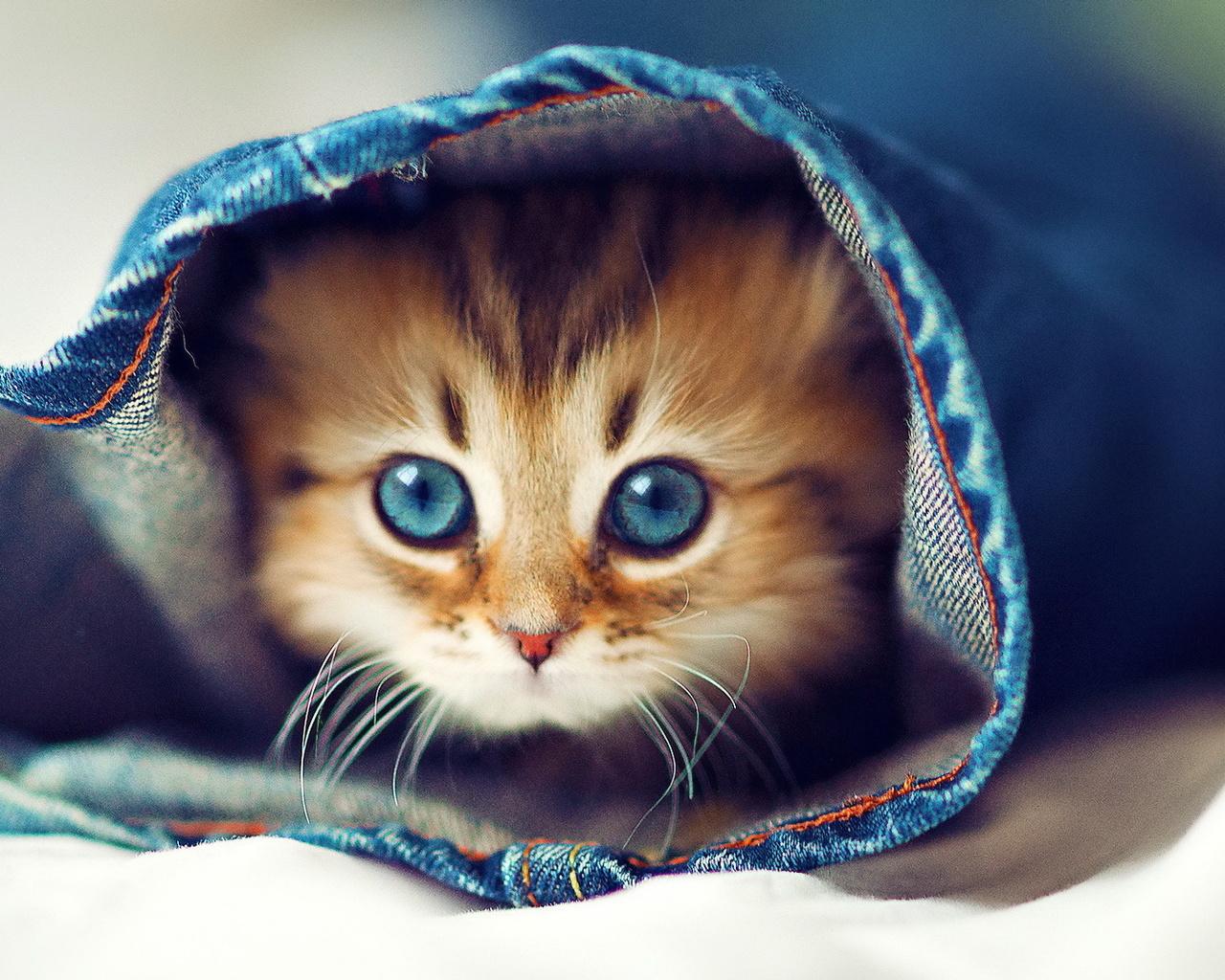 Картинки с очень милыми котятами