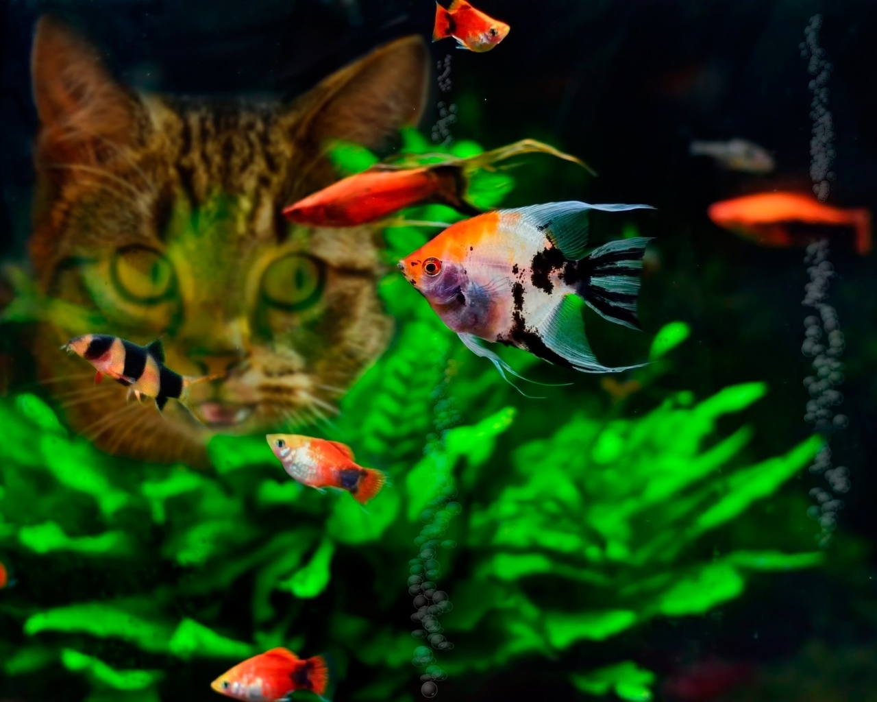 Аквариумные рыбки картинки на телефон первого