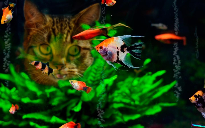 картинки на телефон новые аквариумные рыбы дом культуры
