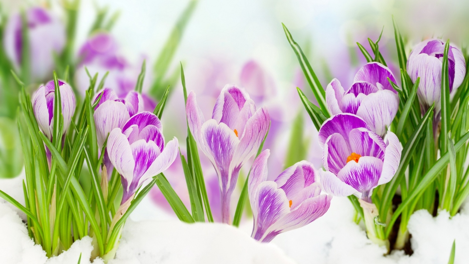 Картинки ранней весны день рождения