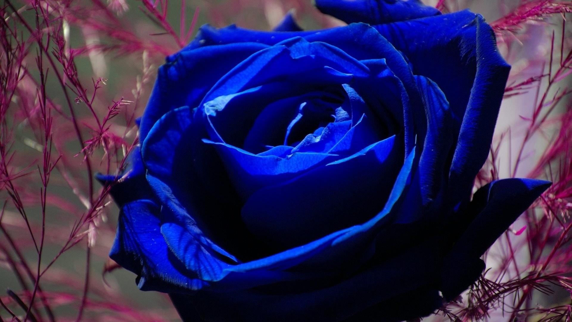 картинки цветов черные и синие межкомнатные