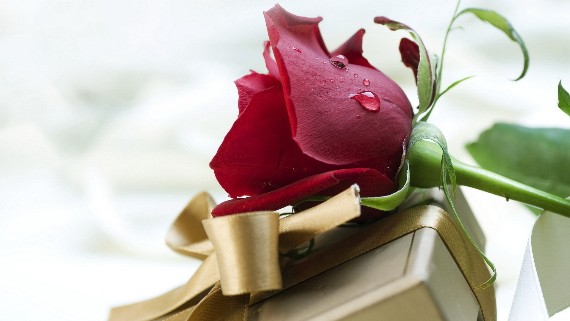 айфон красивые картинки цветы на ватсап просите оставить