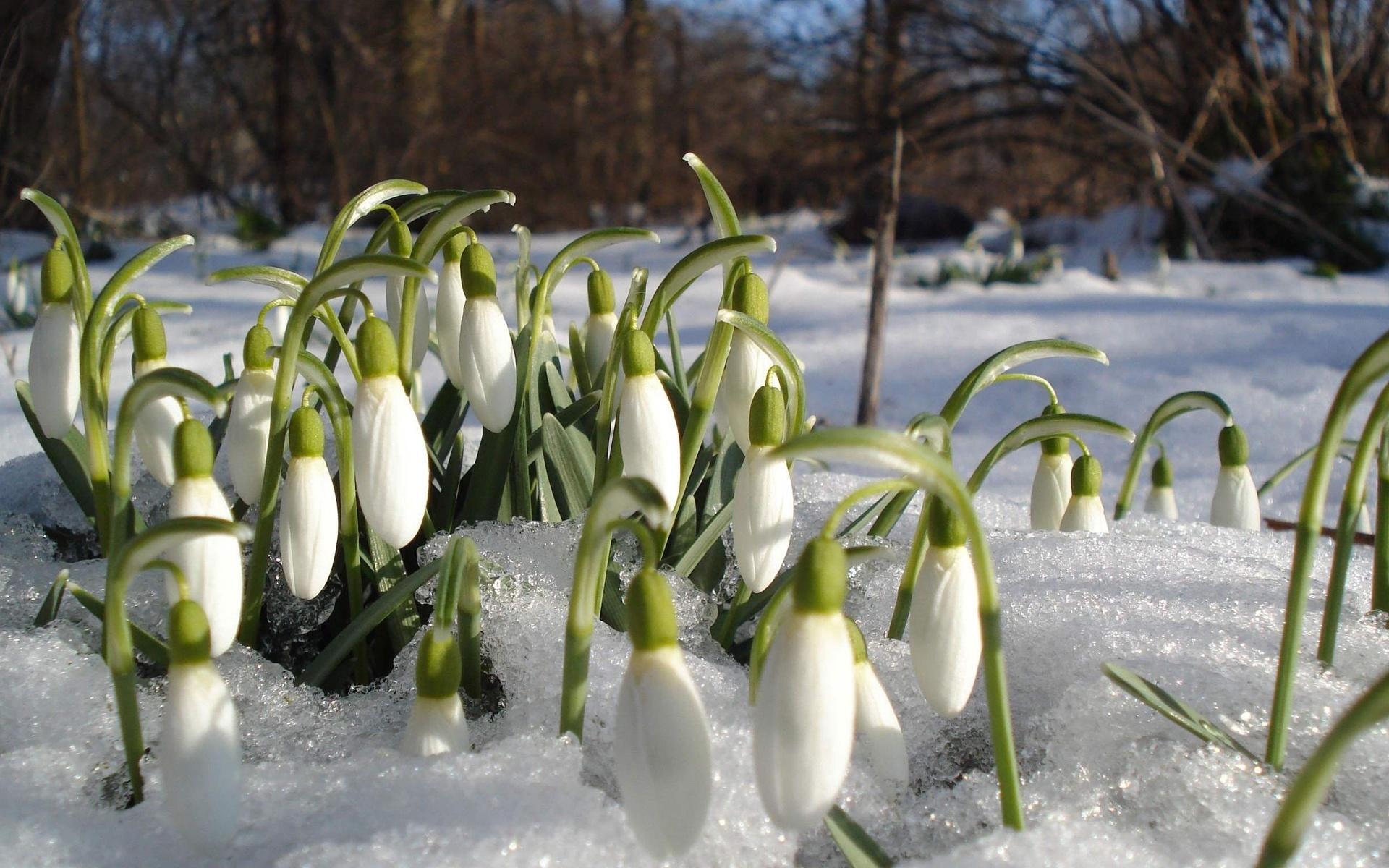 картинки ранней весны на телефон действия проводились