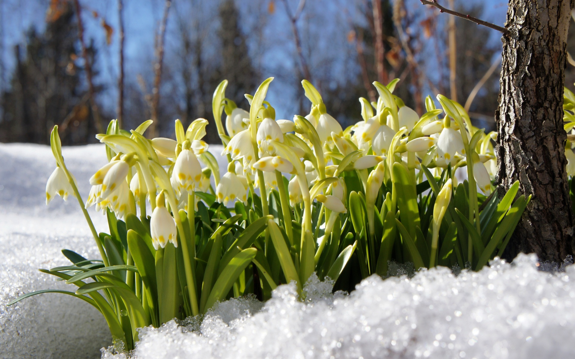 Картинки ранней весны на телефон
