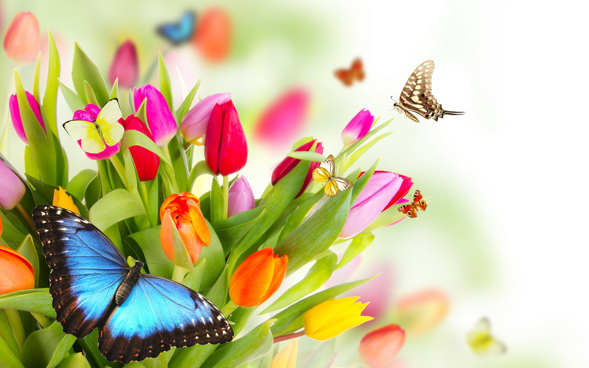 Открытка цветы бабочки, поздравление открытках