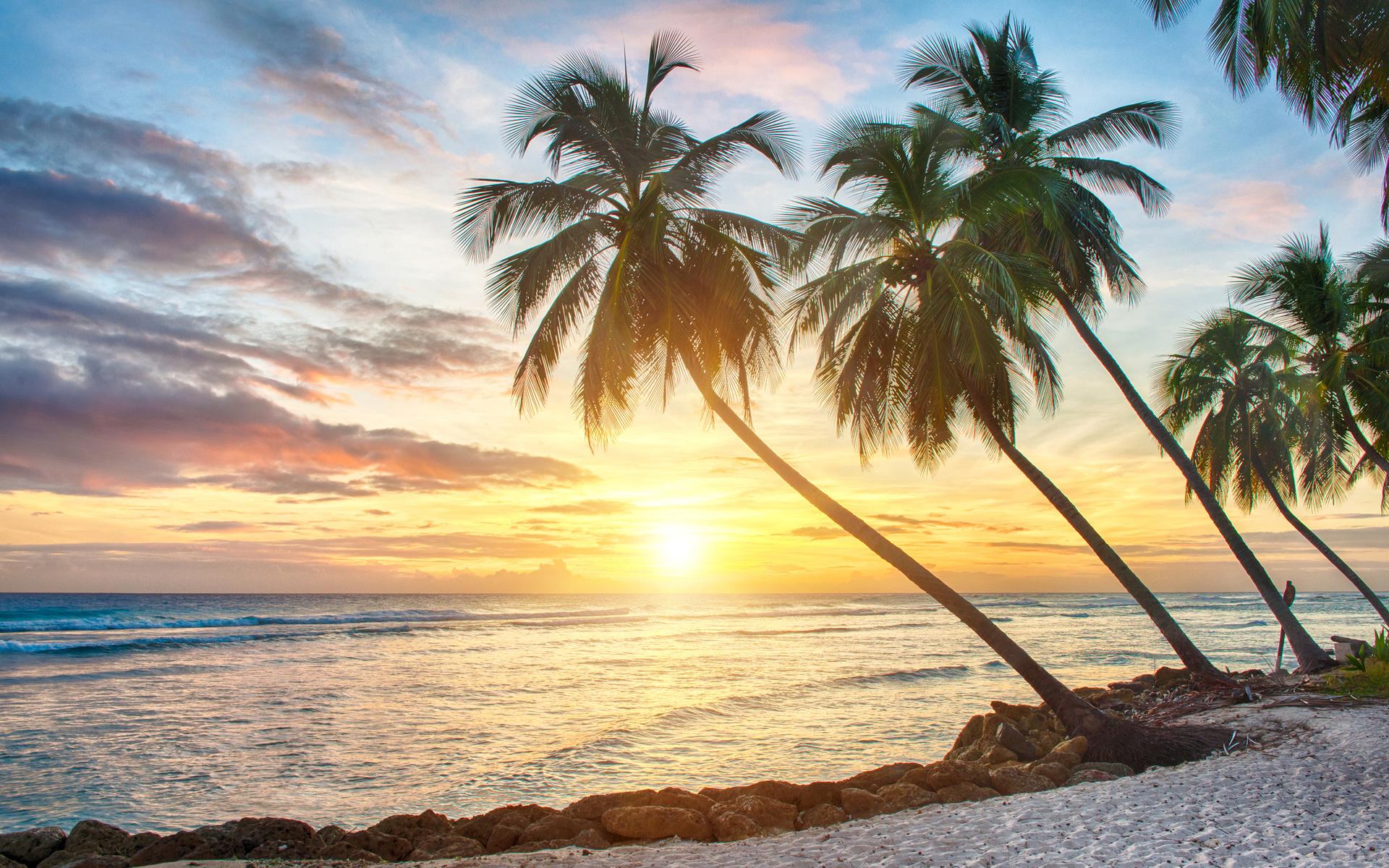 картинка на сотку пальмы море реку
