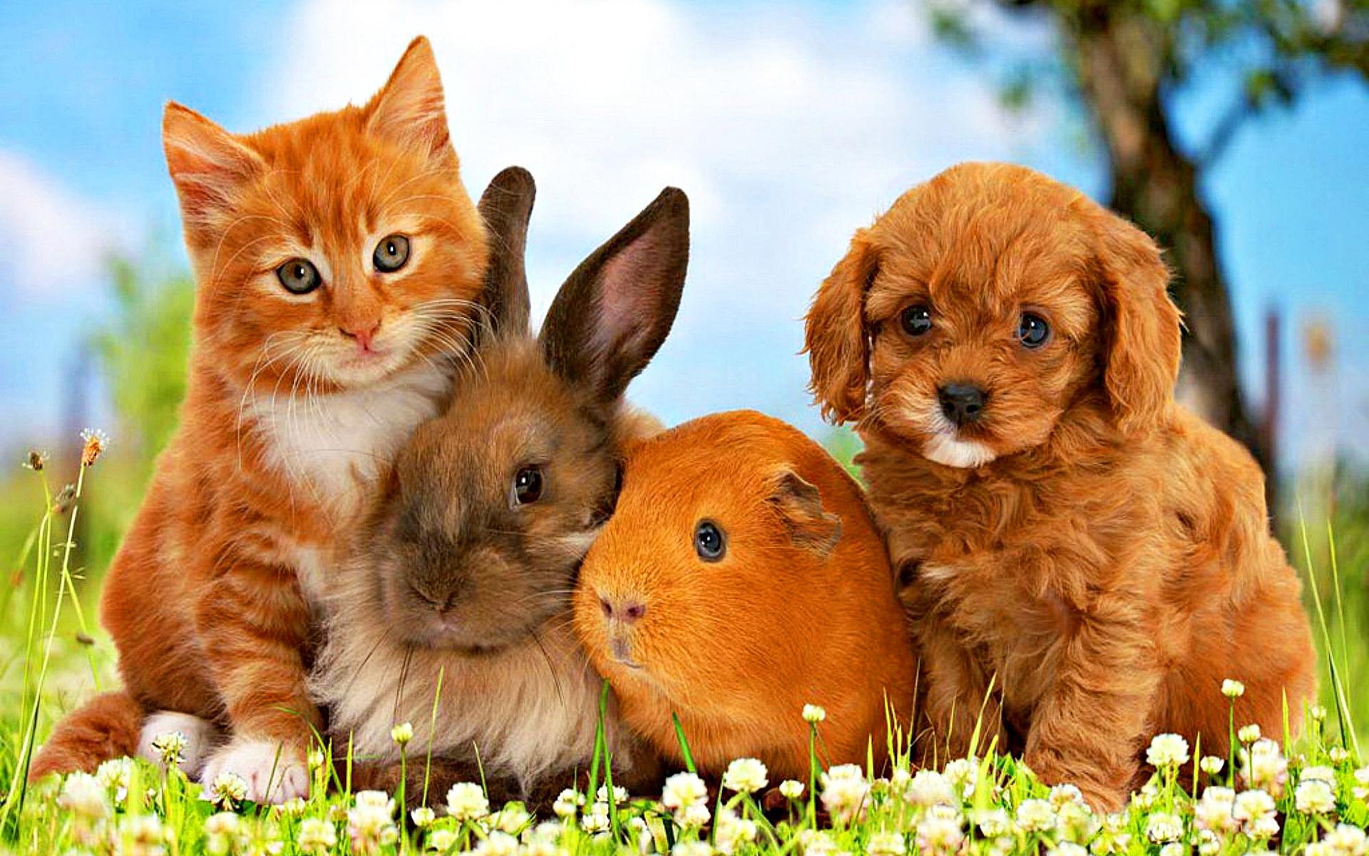 Картинки про кошек и кроликов