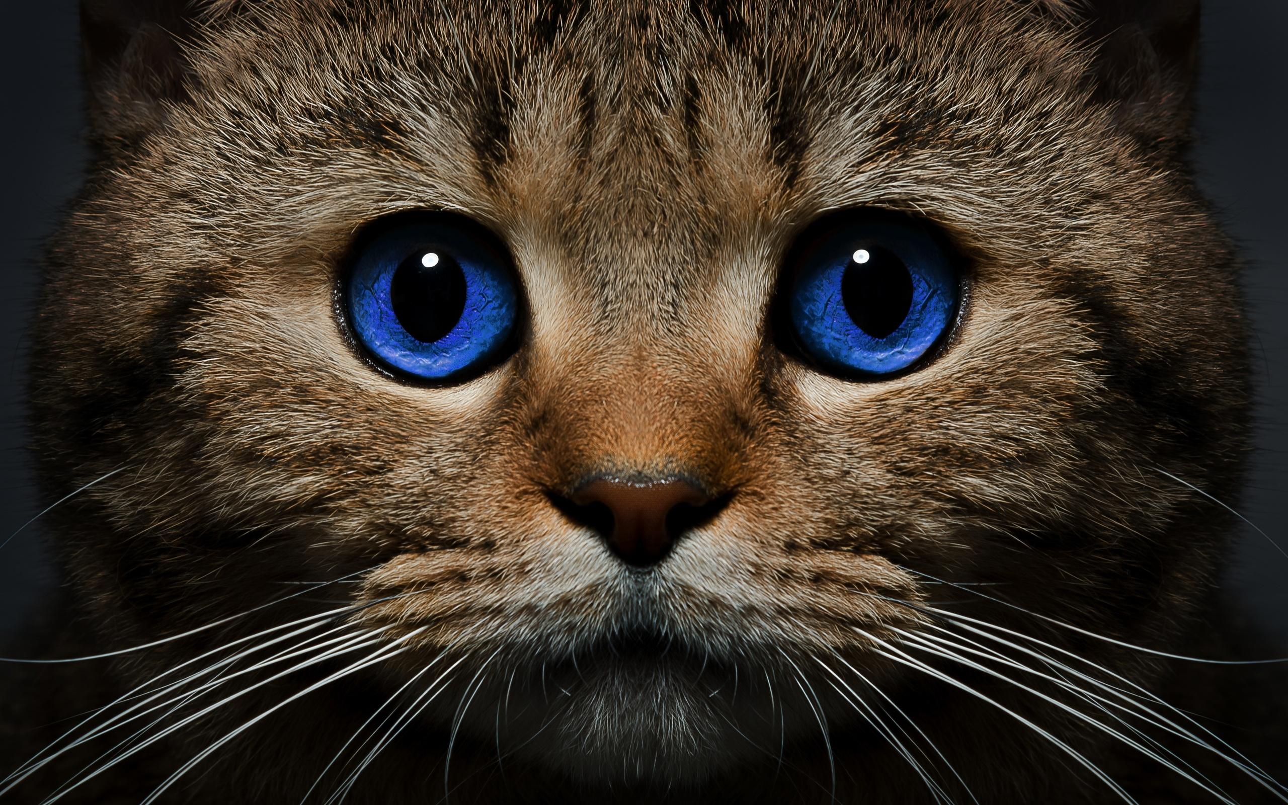 Фотографии кошек картинки, распечатку