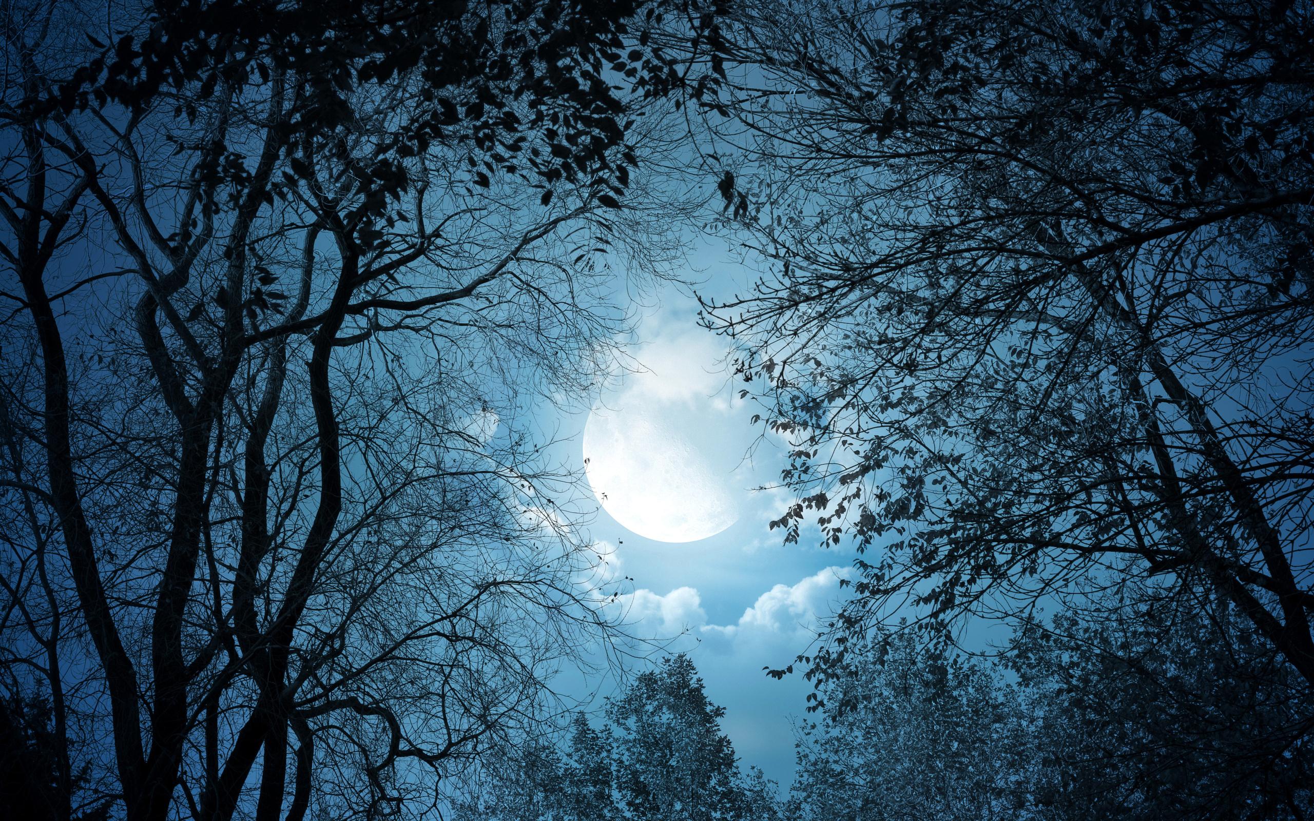 для ночь в лесу в полнолуние картинки простой