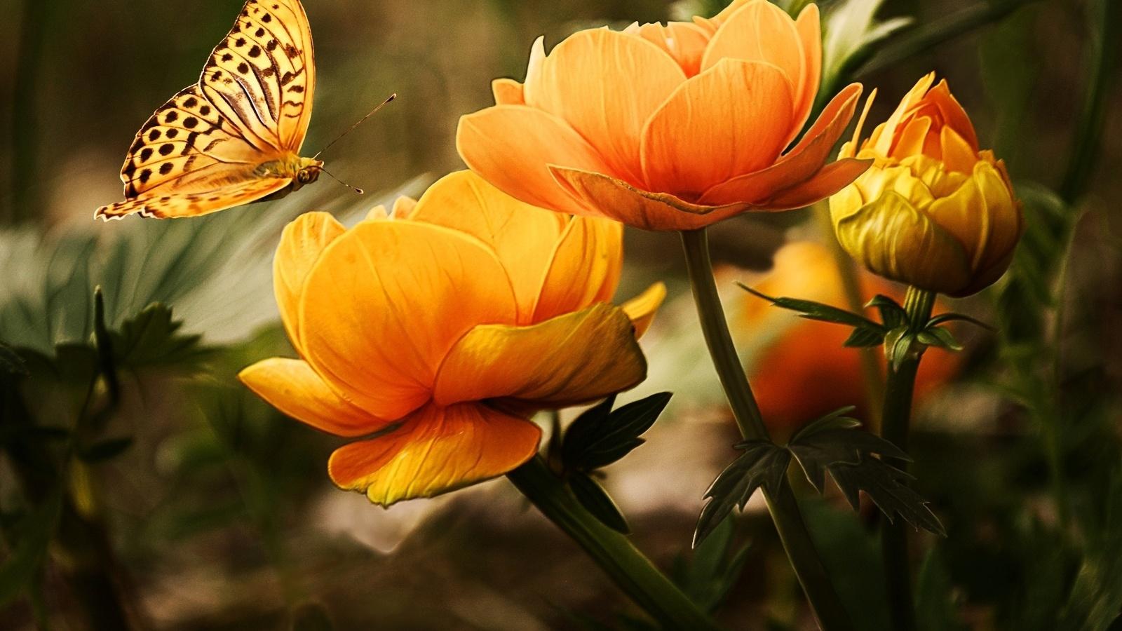 Ламинат расцветки фото словам