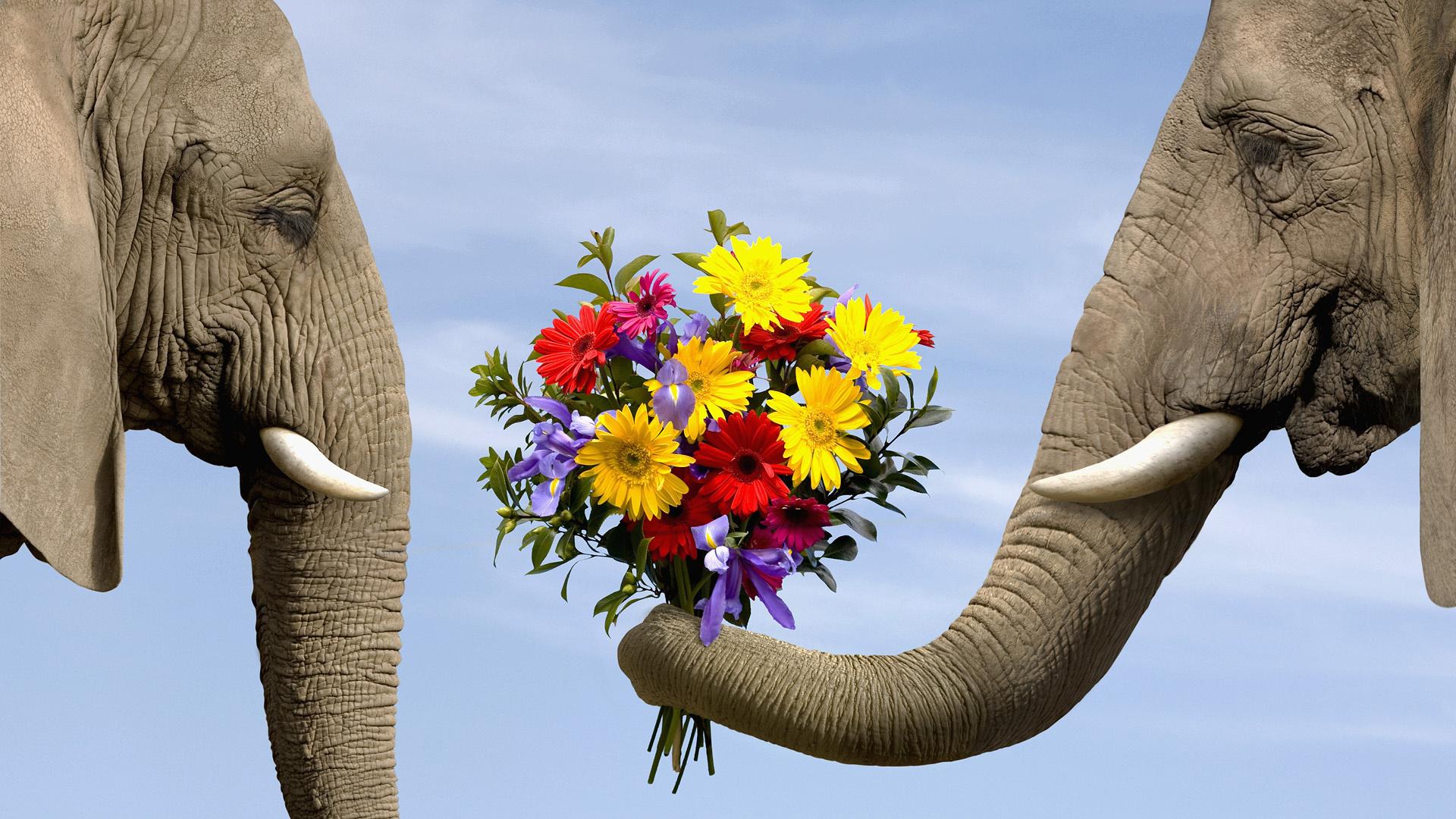 Открытки смешные слоны, спокойной ночи доченька