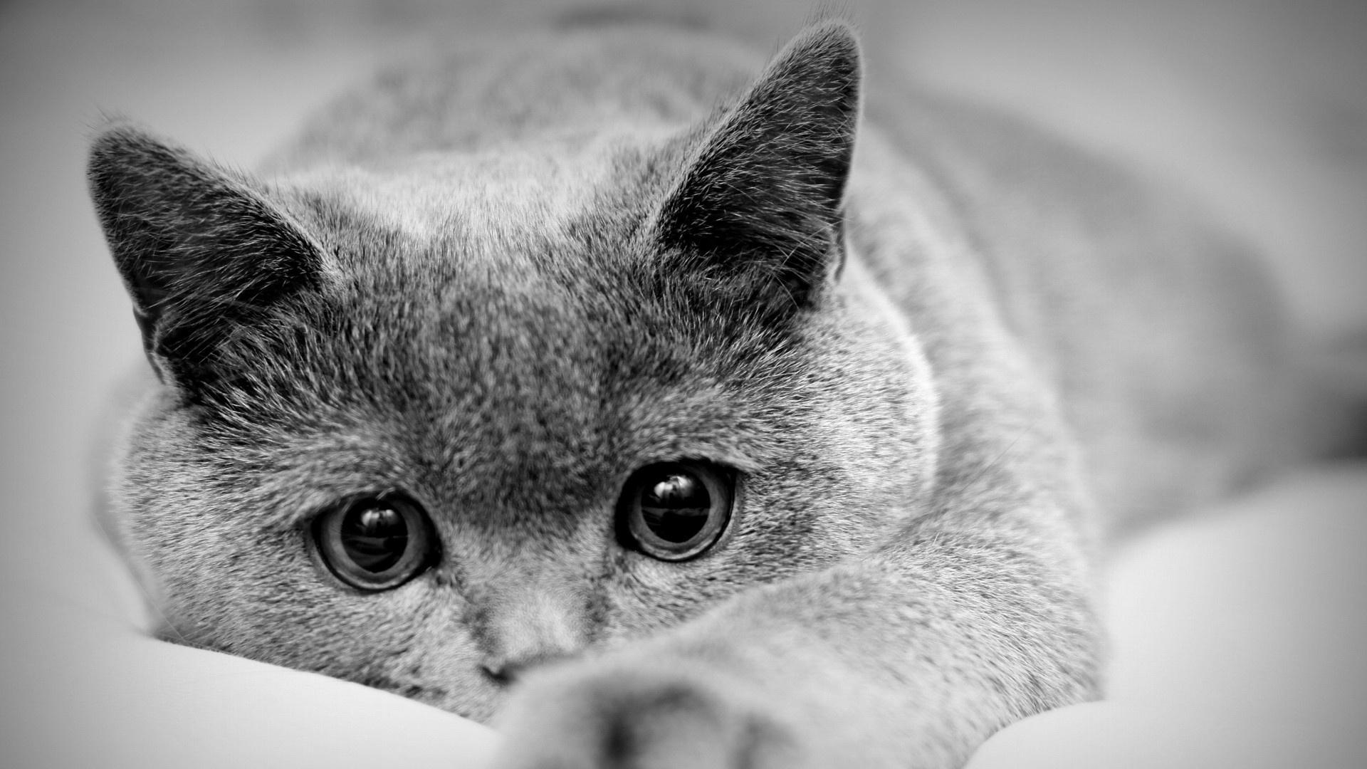 Белые картинки с кошками и надписями, марта кошка