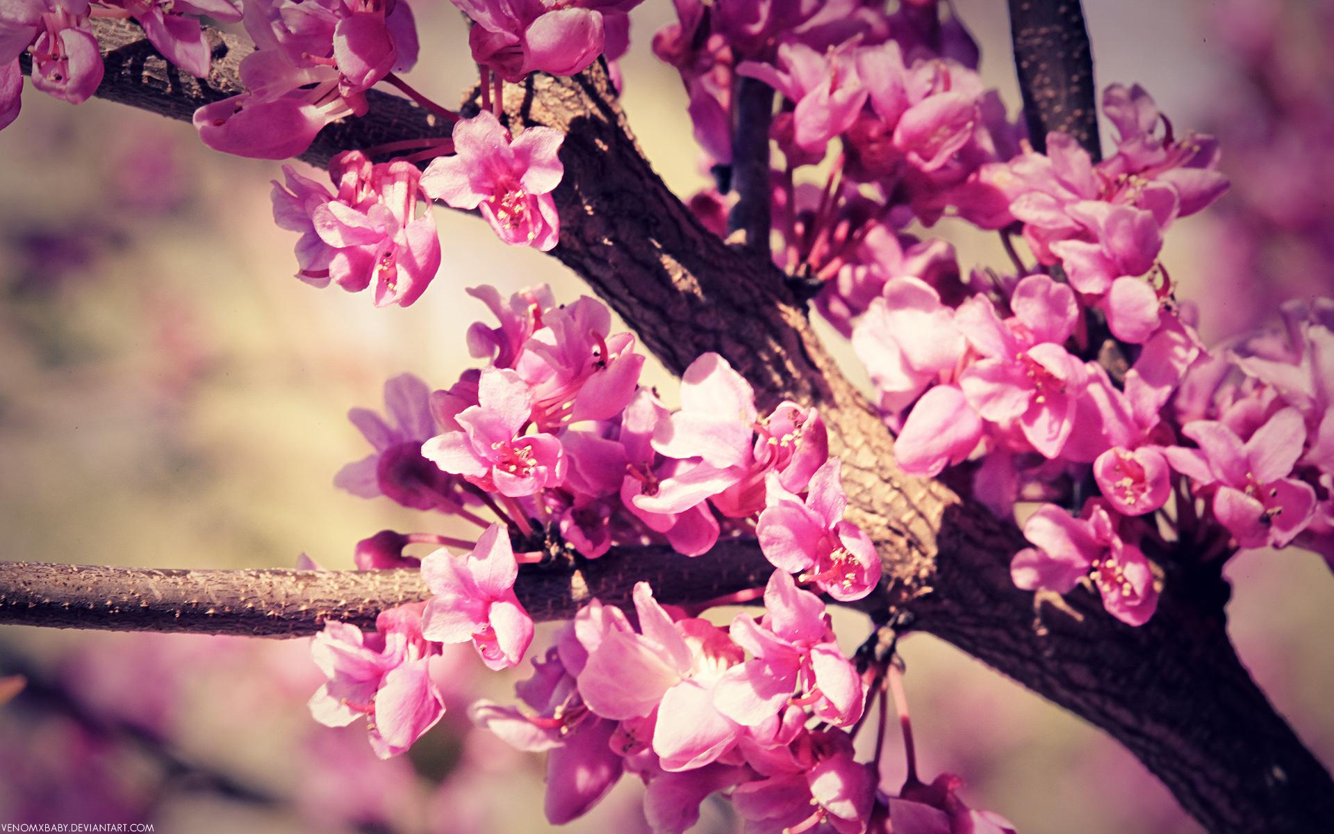 Картинки на телефон с розовыми цветами