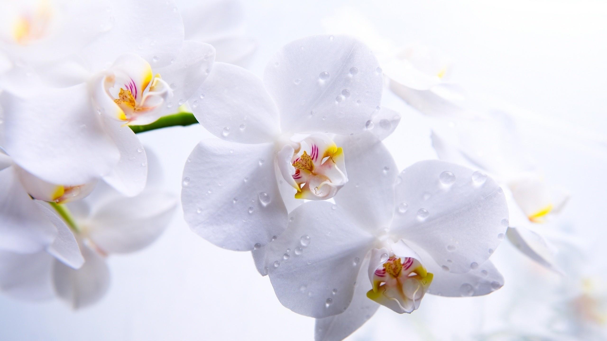 этом смысле весенние орхидеи открытки цены
