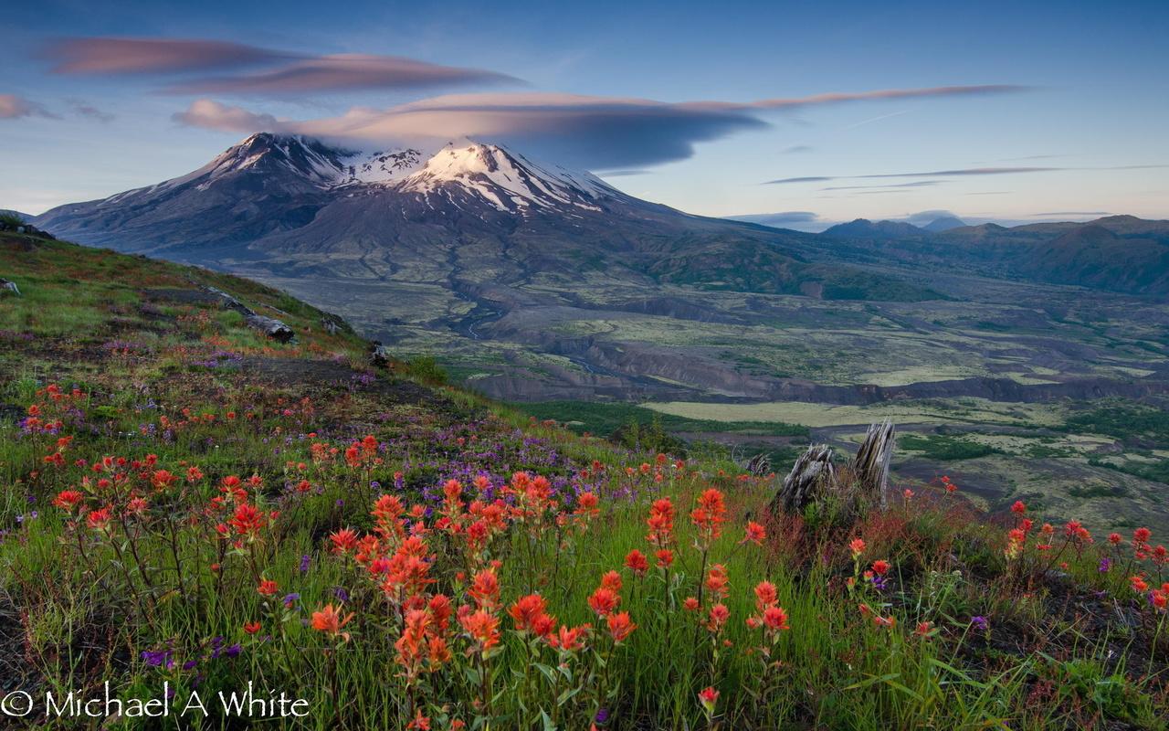 картинка поле цветов и горы подарков так