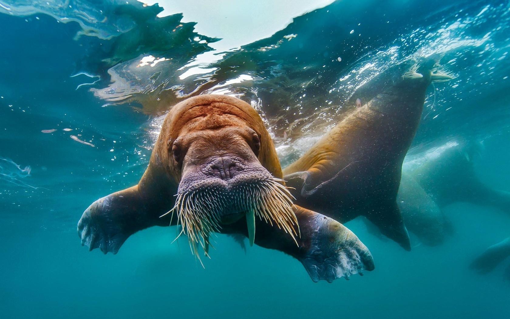 Отражение в воде санкт петербург фото что