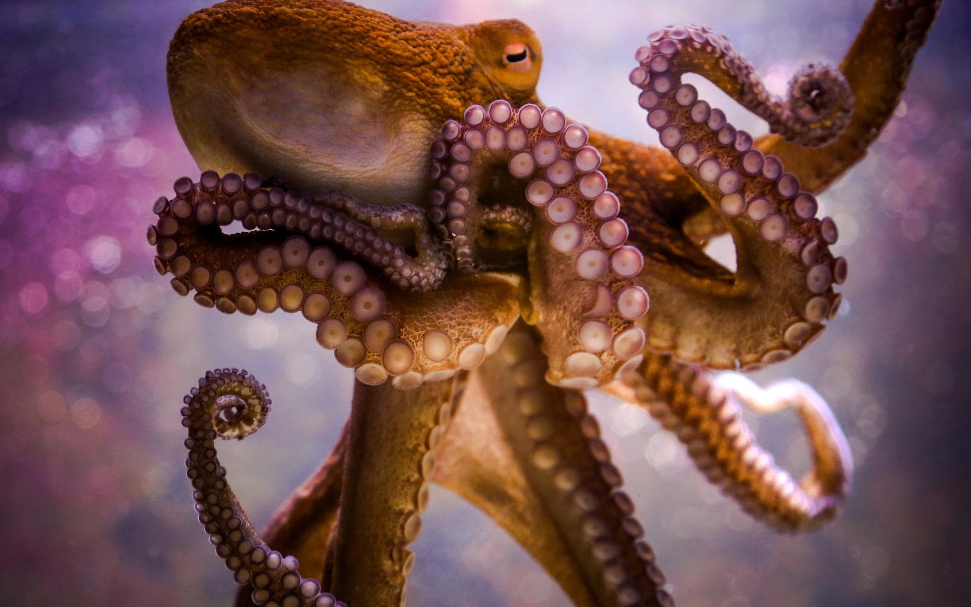 Картинки осьминога в хорошем качестве