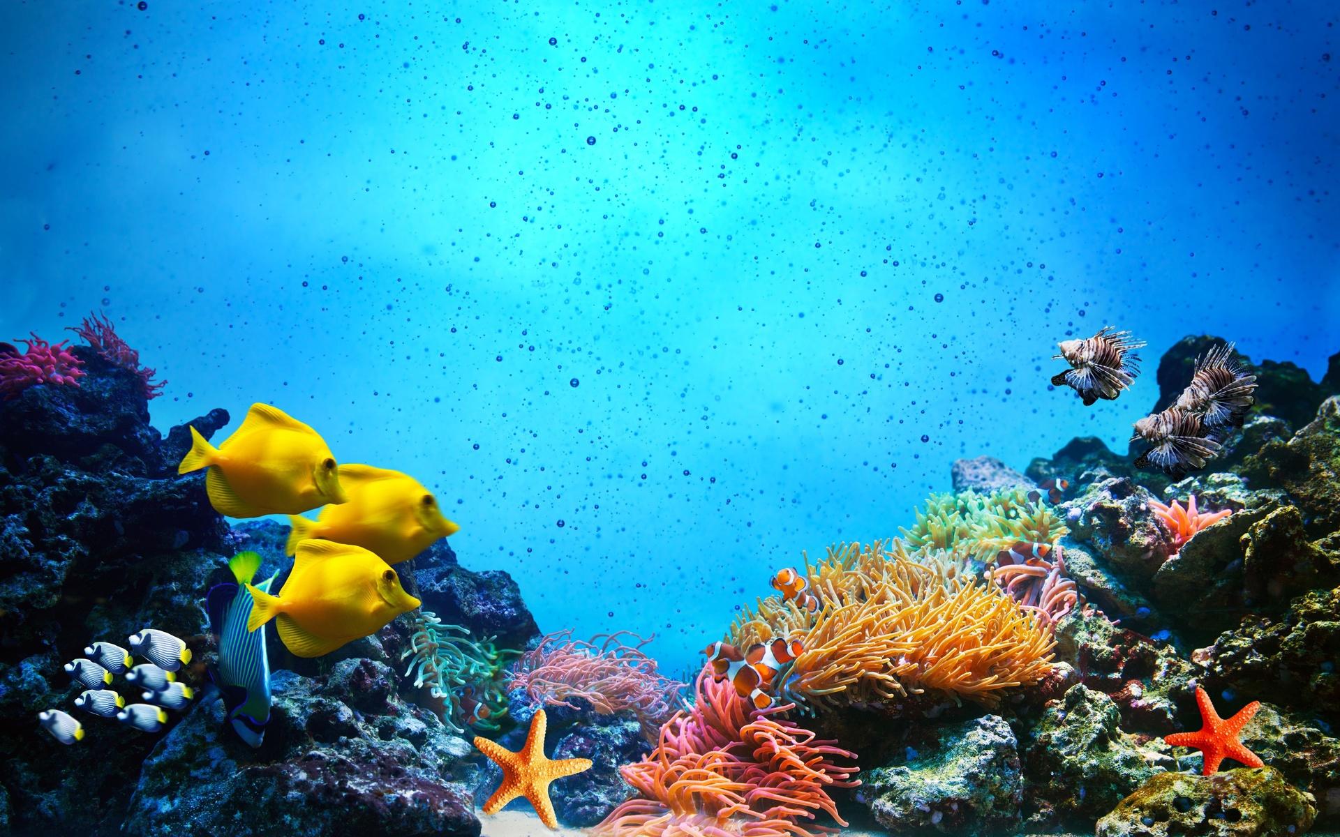 были картинки под морем фотках она всегда