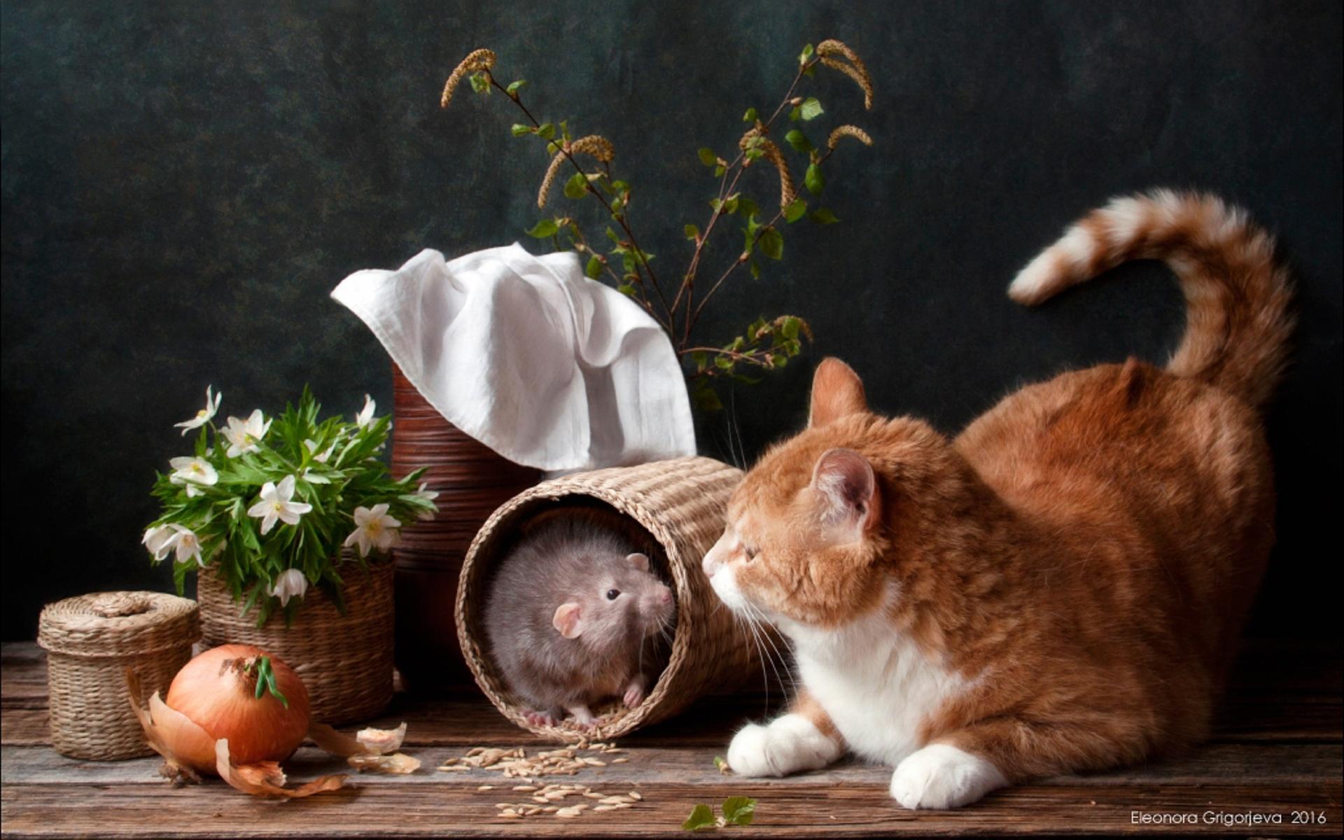 картинки фотонатюрморты с кошками бы, всем всё