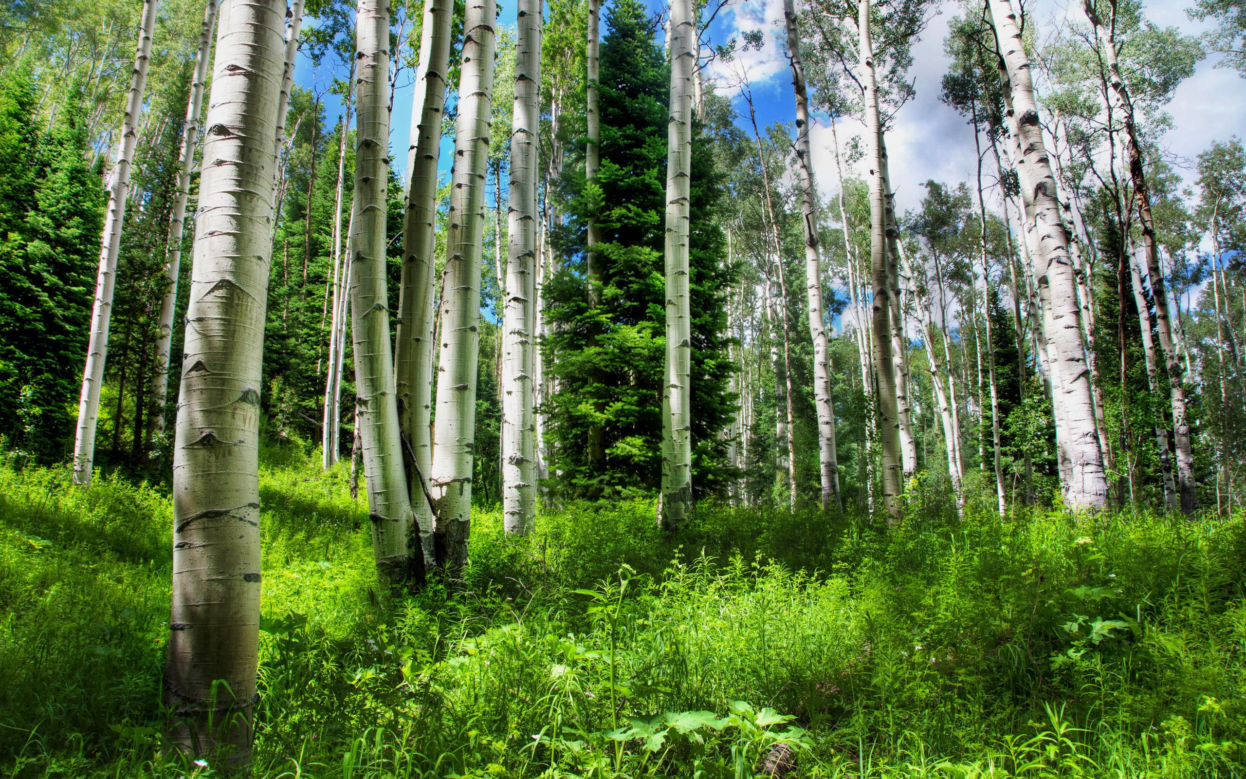 Открытки лес природа, прикольные машинах
