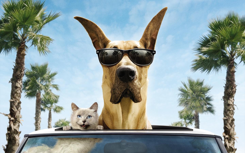 Смешные картинки собаки и машины