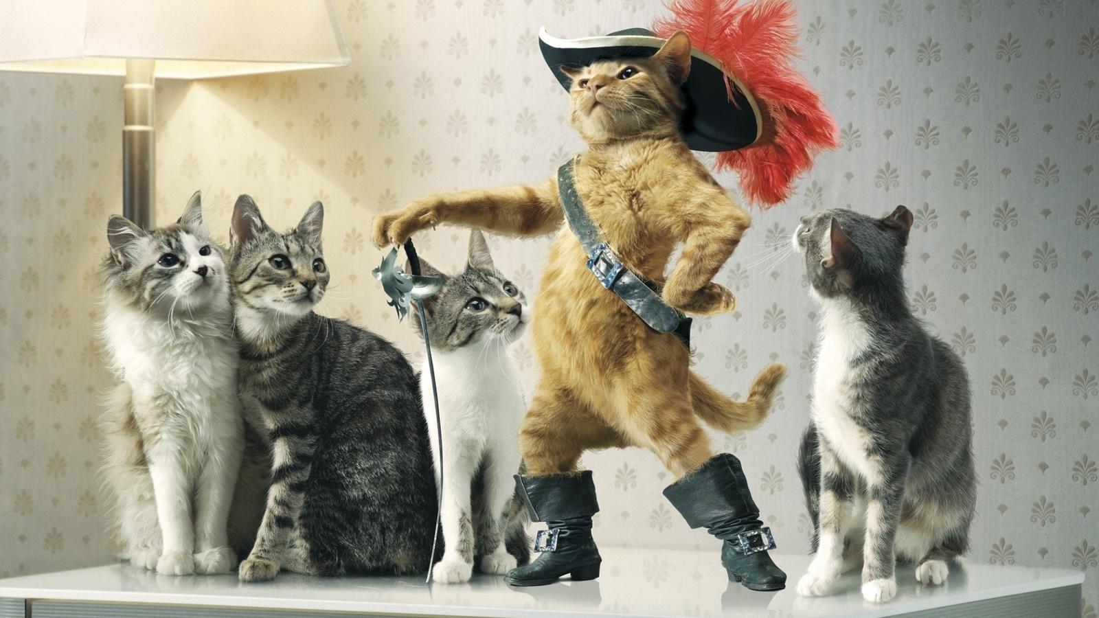 только коты приколисты картинки простой открытке иногда