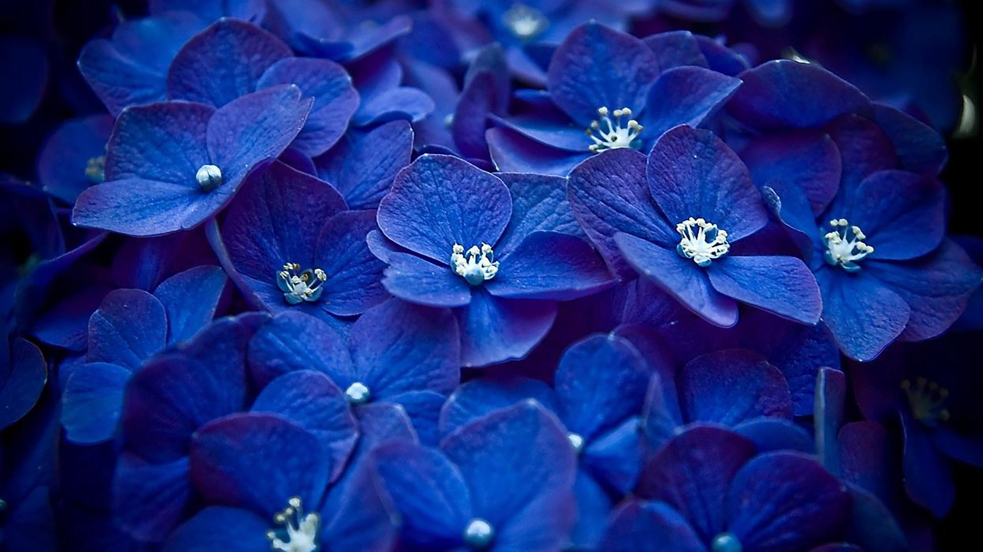 вас просто красивые картинки на синем фоне фото вытянутой