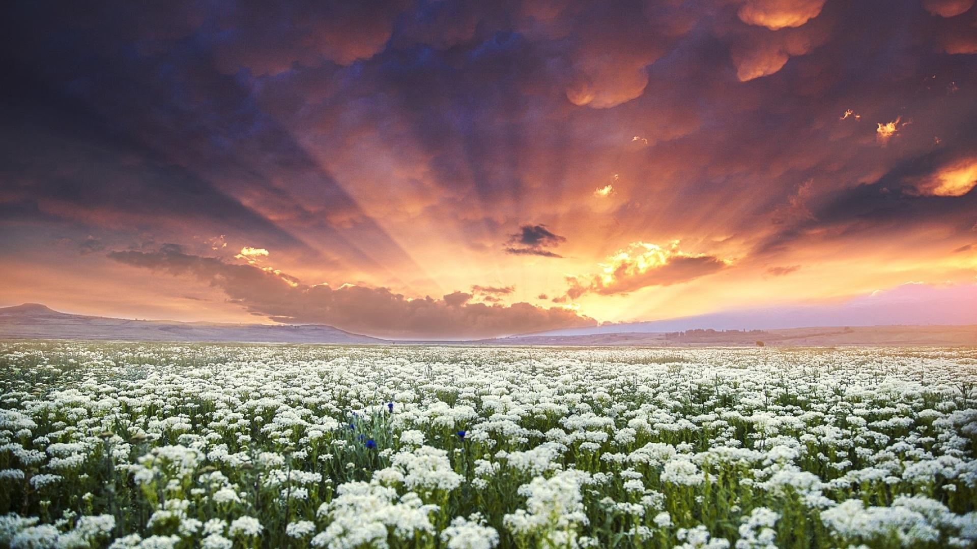 картинки облака и ромашки покажут