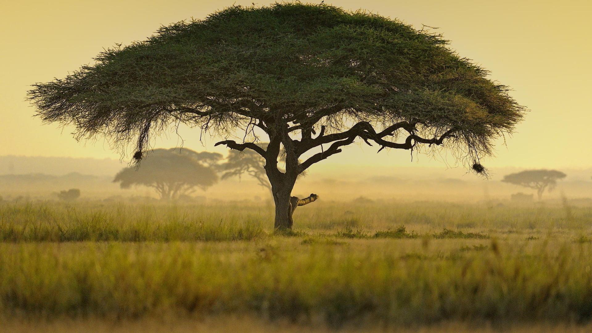 Деревья в картинках южных стран