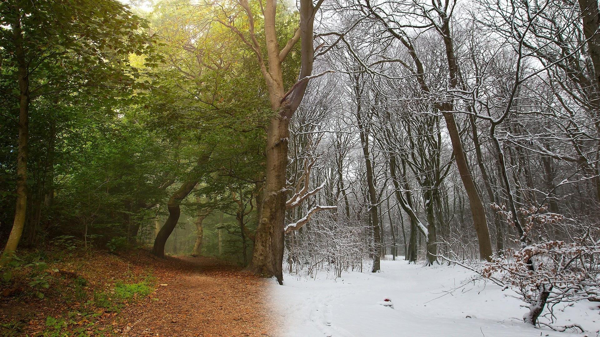 Лето зима картинки
