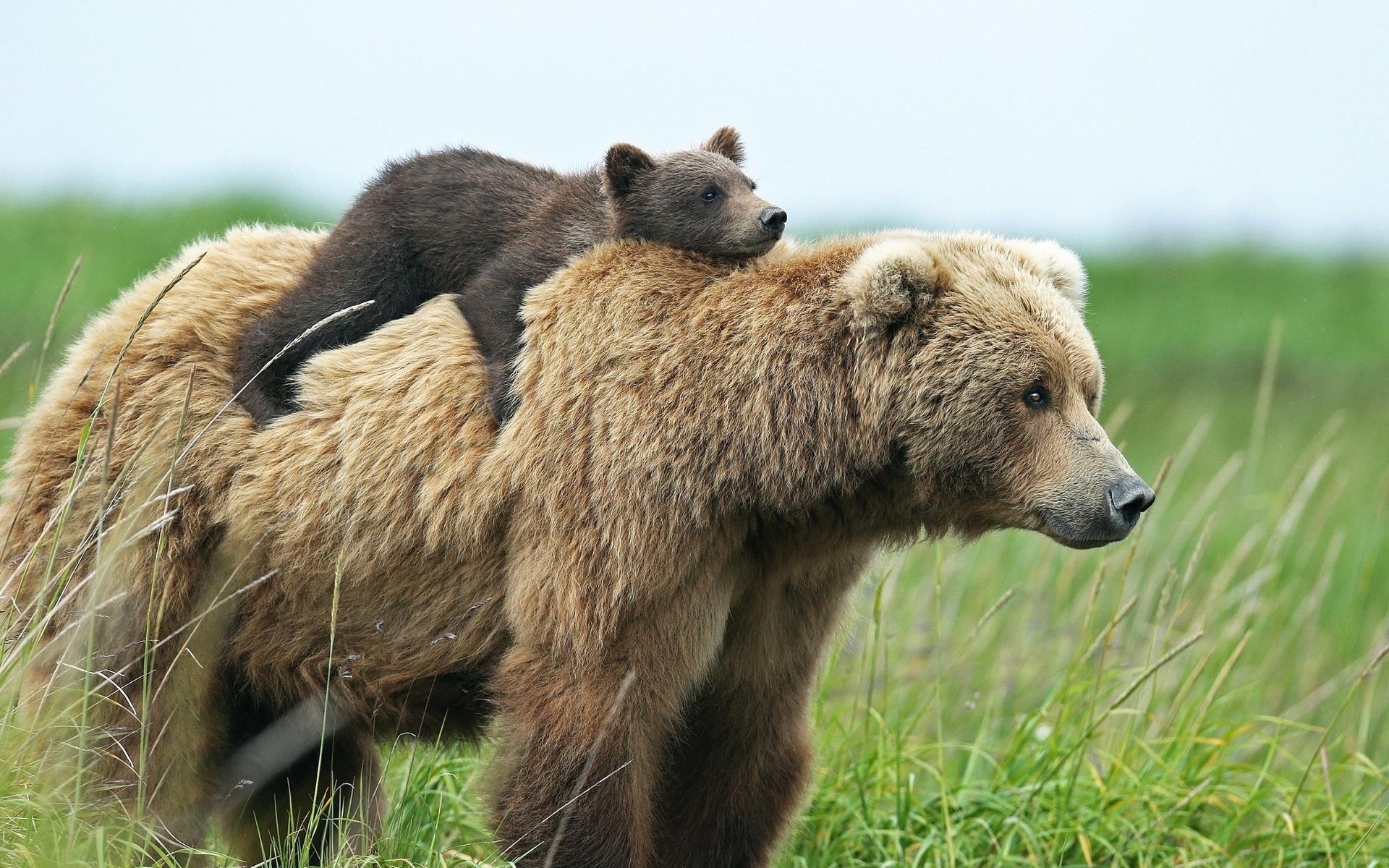 которые картинки разных медведей них написано