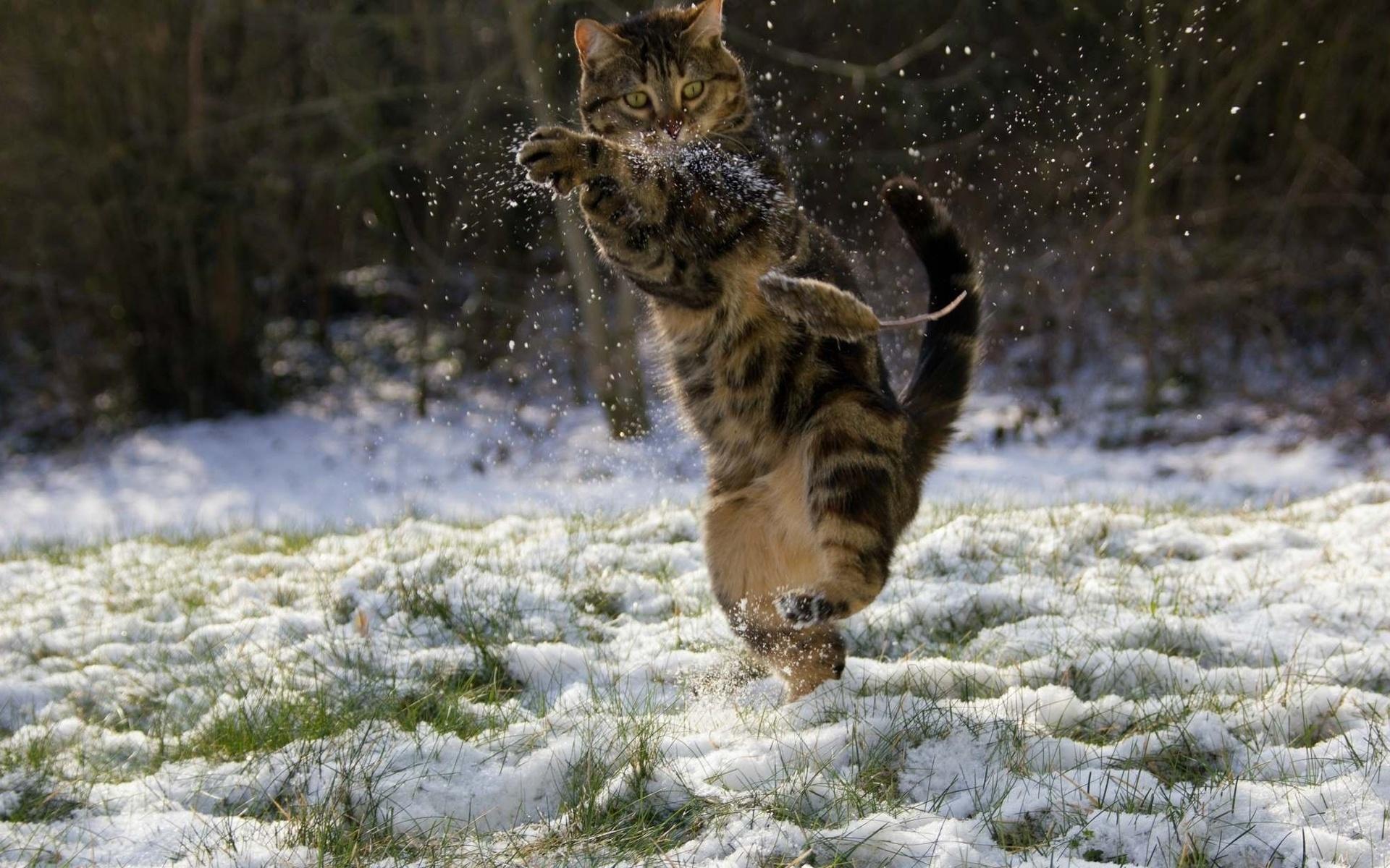 стоят картинки кот радуется зиме встретились татьяной евгеньевной