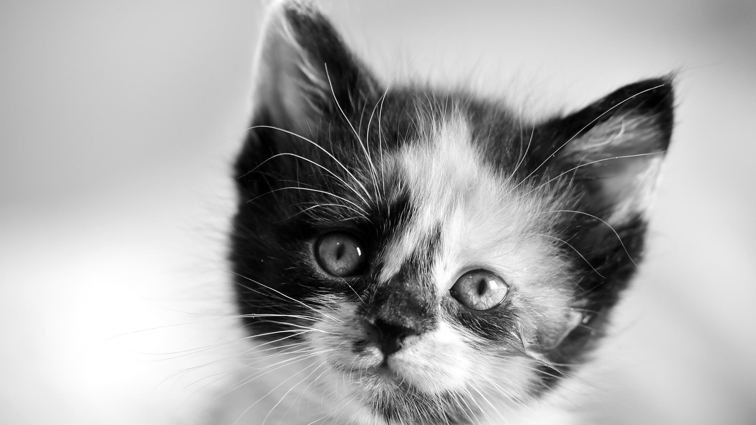 Картинка черно белого котика