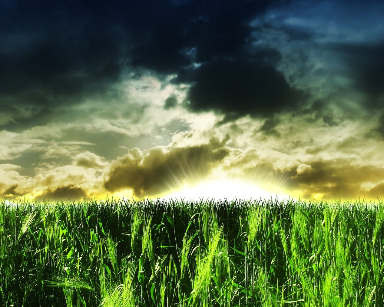 картинки с зеленым полем и словом ассоциируется моей