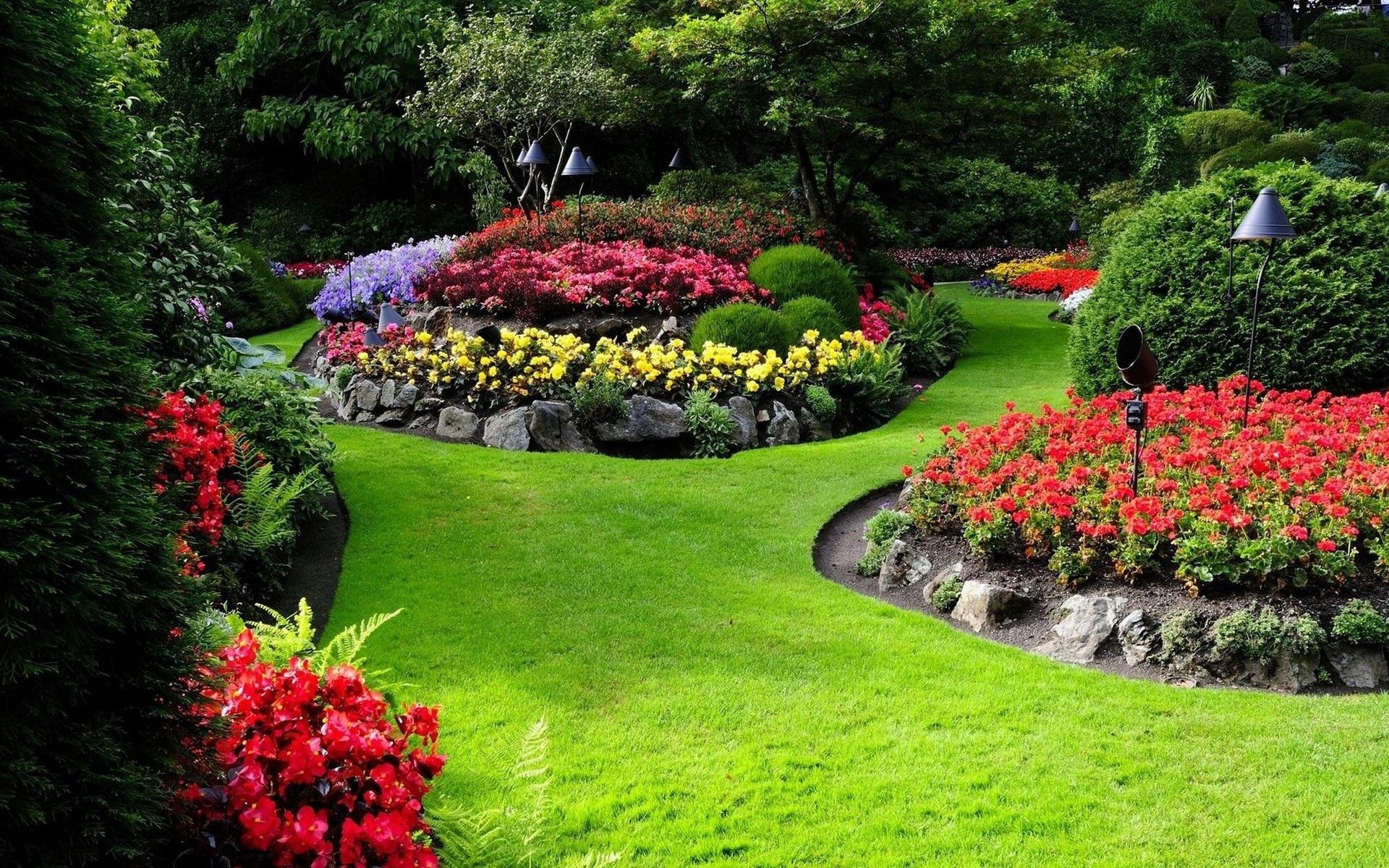 картинки цветы сады клумбы ничто