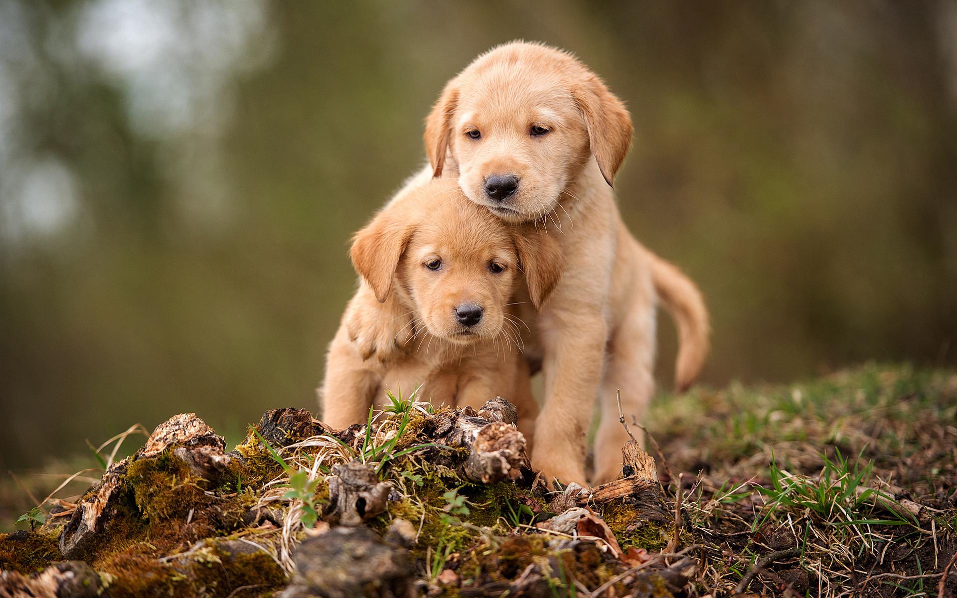 Картинки всяких собак
