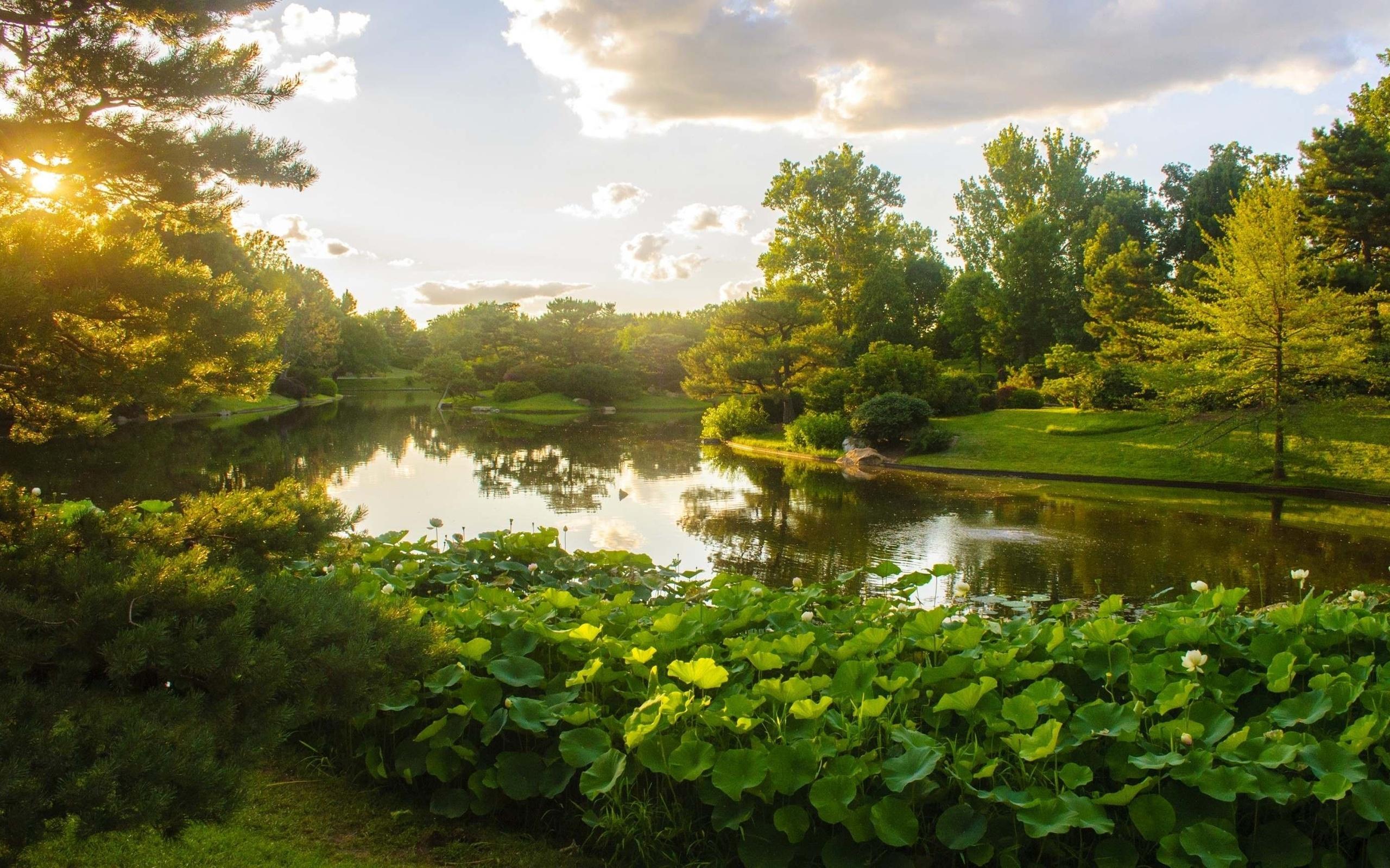 Природа парк летом картинки красивые